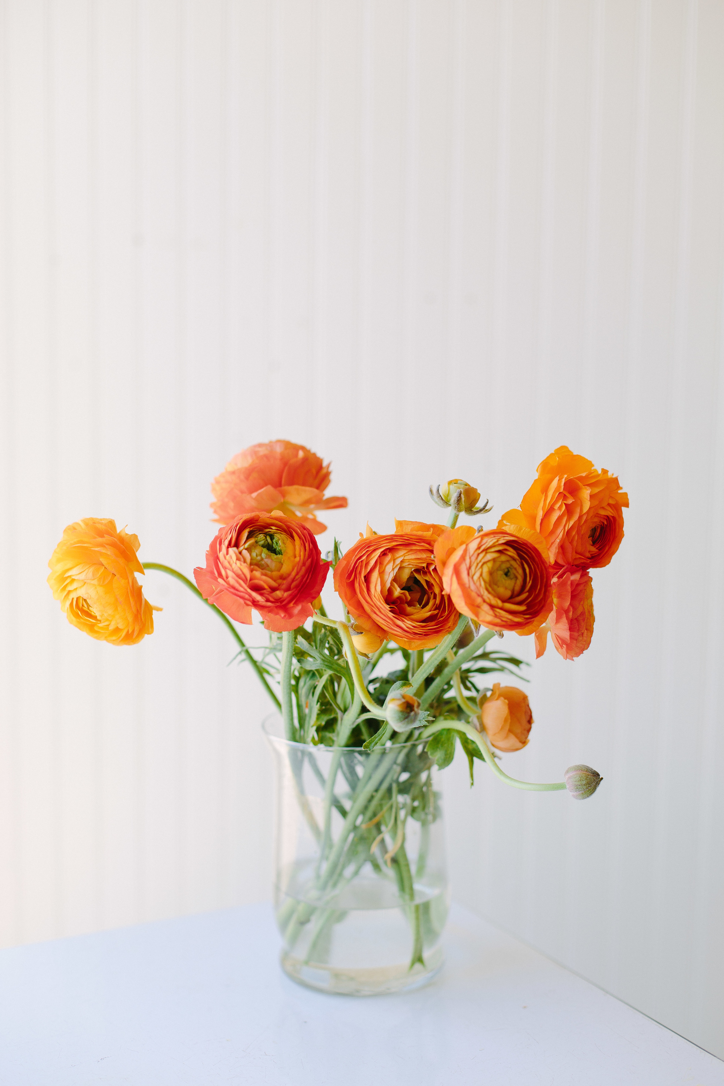 Andrea Naylor Photography Blossoms-9966.jpg
