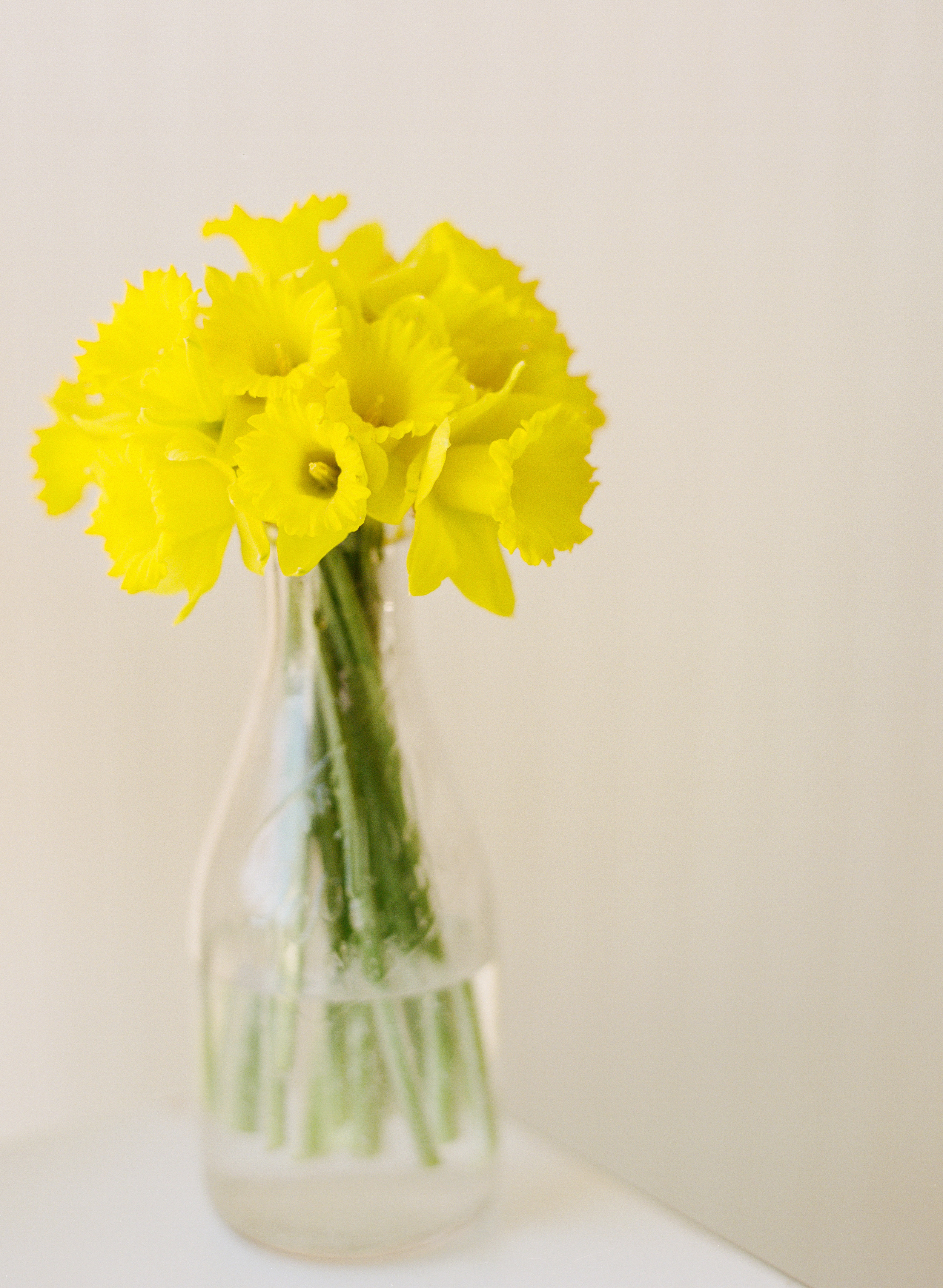 Andrea Naylor Photography Blossoms-000077520016.jpg