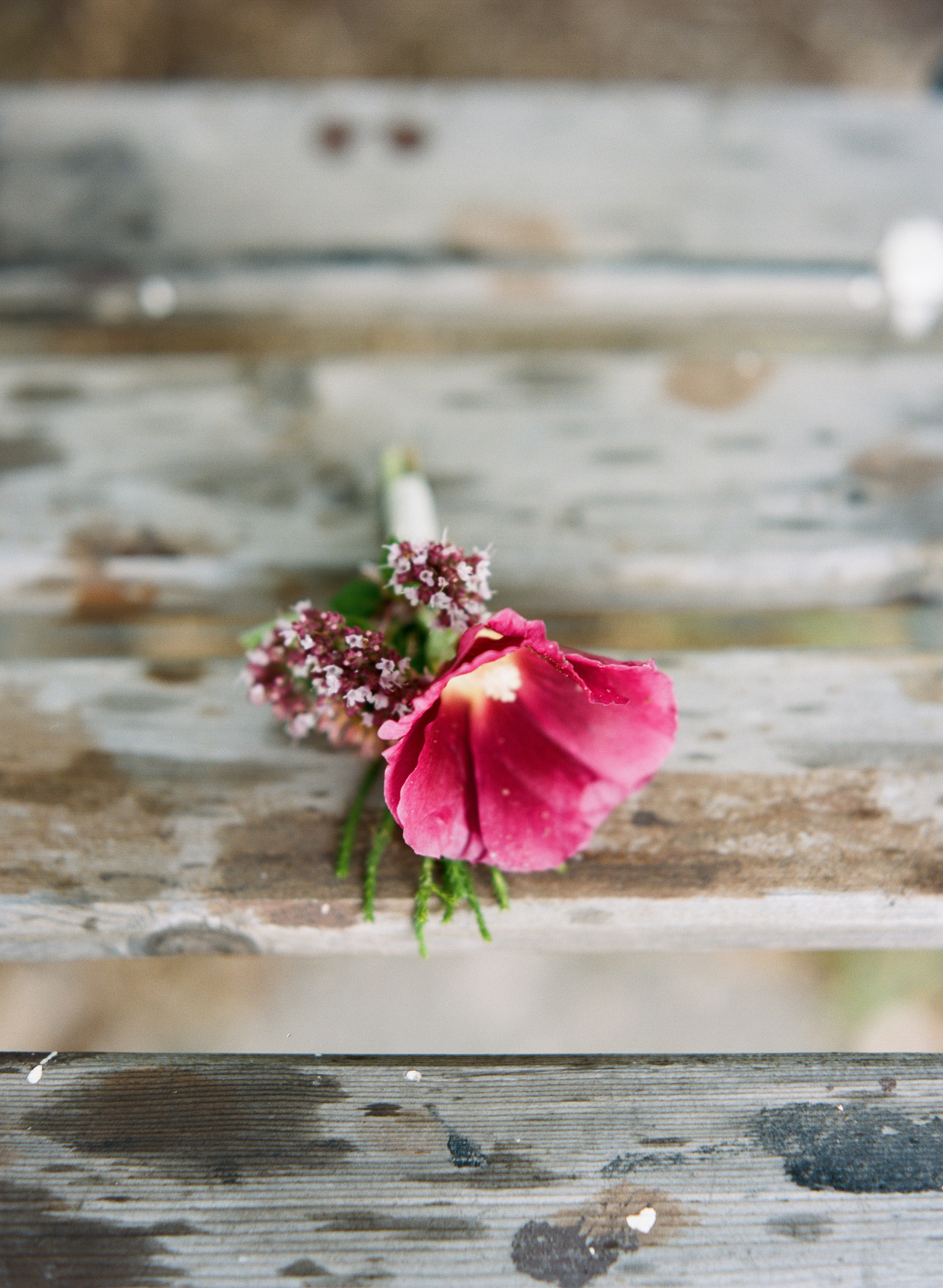 Andrea Naylor Photography Door County Blossoms Flower House Door County Wedding-26090008.jpg