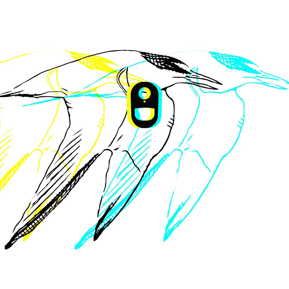 Learn Tern.jpg