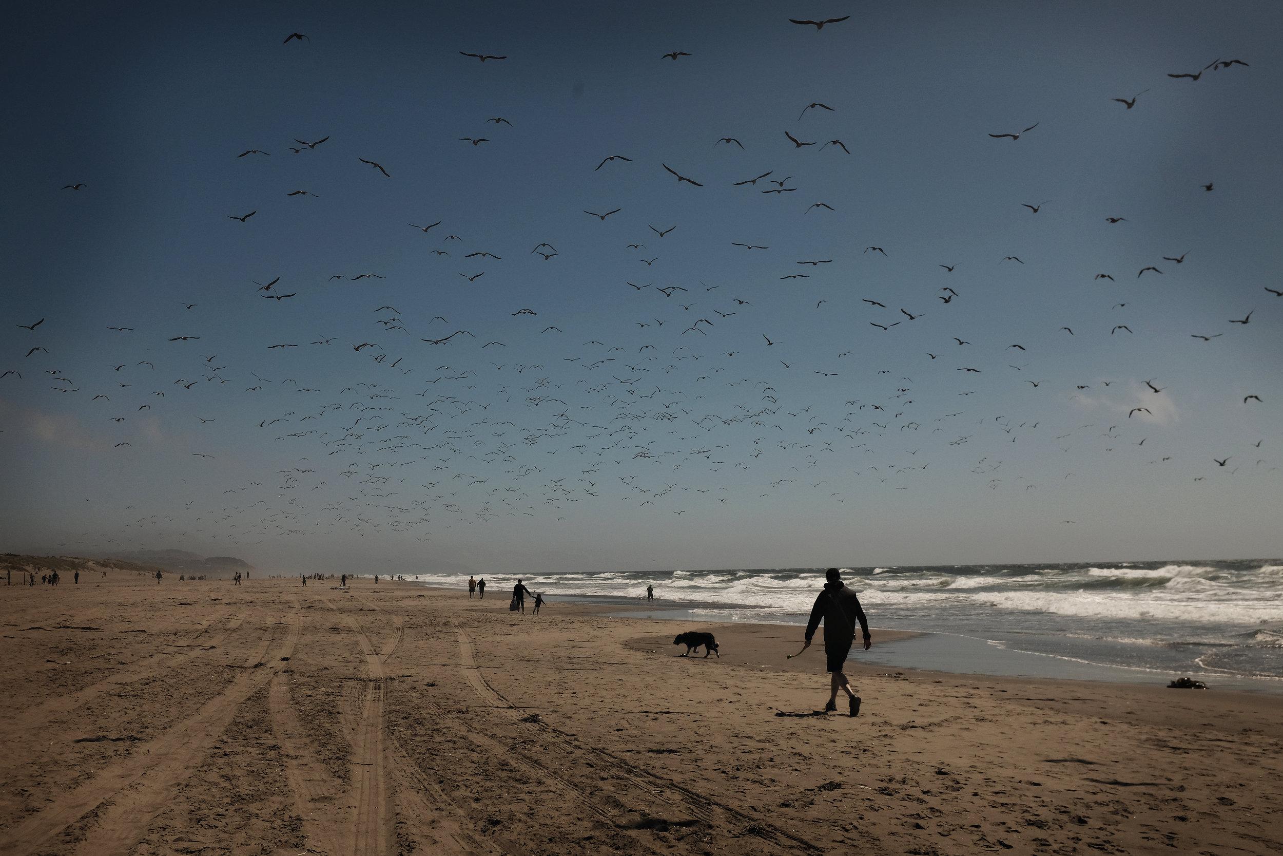 birds_beach.jpg