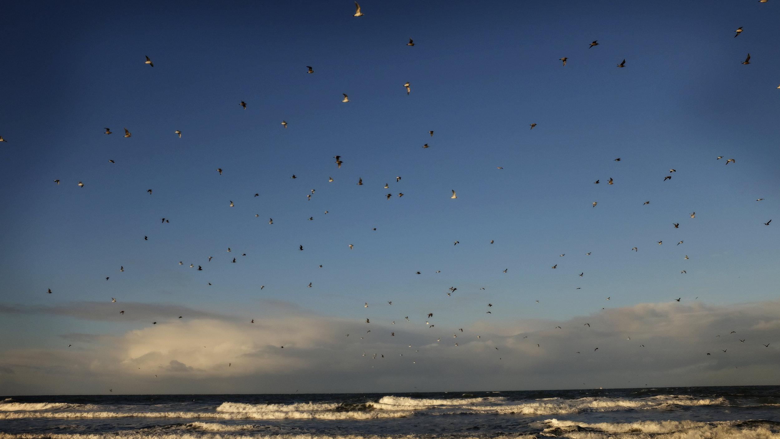 skybirds_2a.jpg