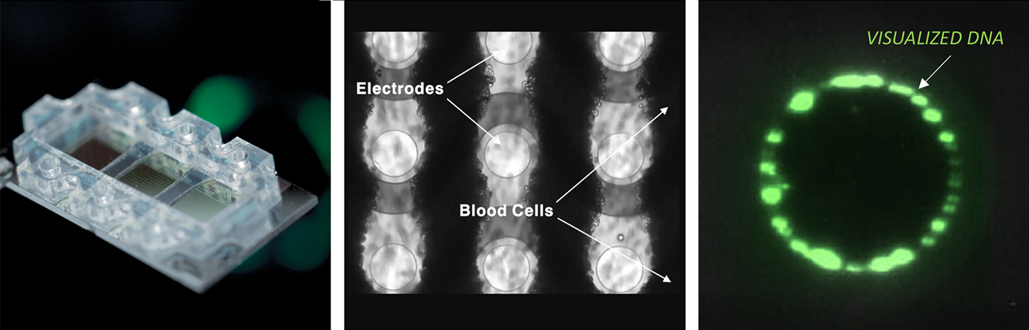 in whole blood, serum or plasma samples, the platform isolates naturally occurring (endogenous) nanoparticles and biomolecules within 50nm - 1000nm range, such as cell free DNA, extracellular vesicles, and aggregated proteins.