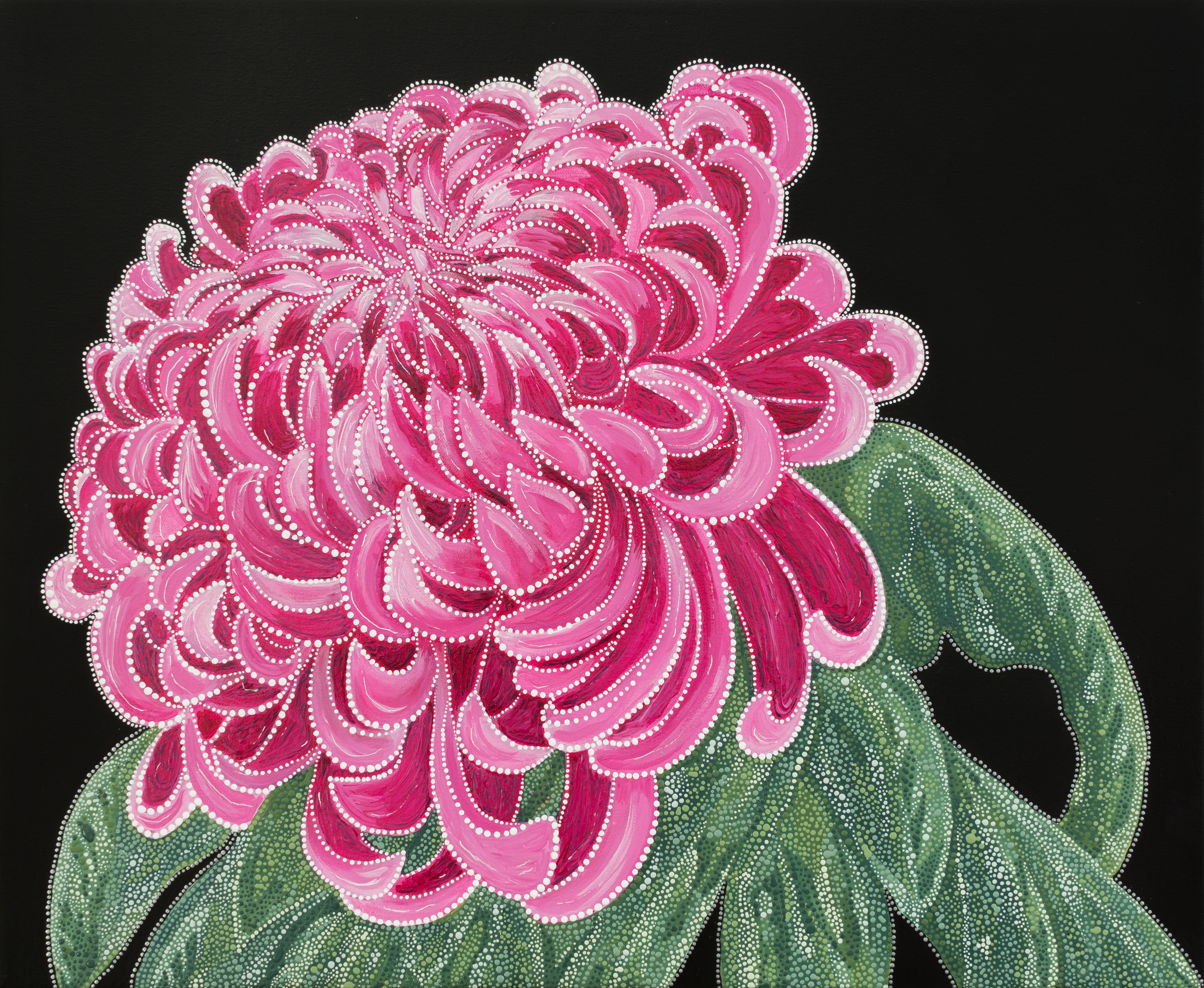 Chrysanthemum 1.