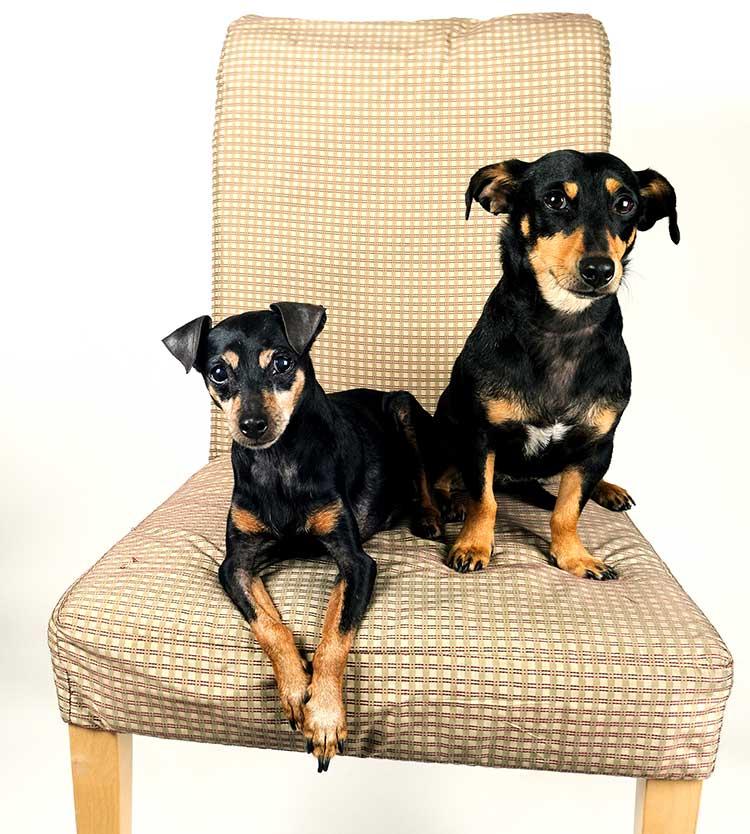 M-Dogs-1-web.jpg