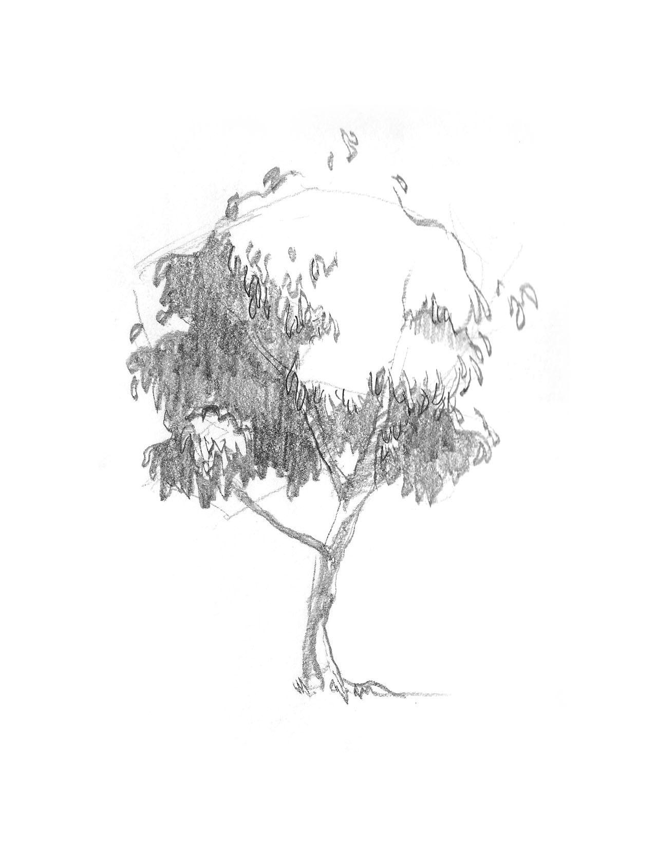 2018-09_Tree 02.jpg