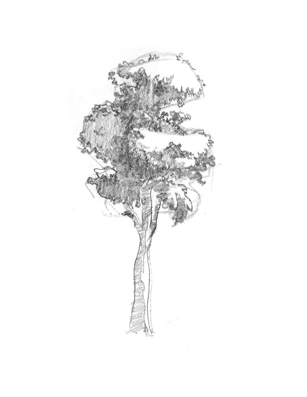 2018-09_Tree 08.jpg