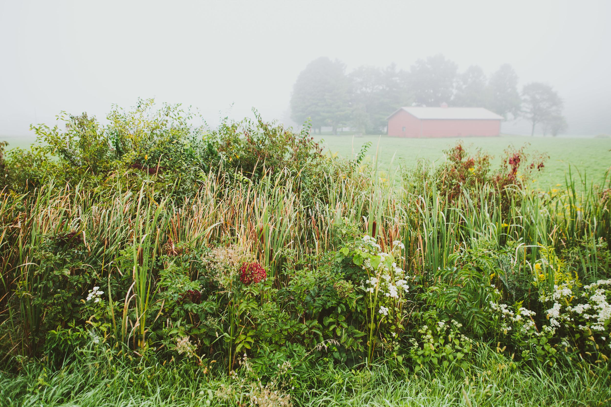 CountryFog-50.jpg