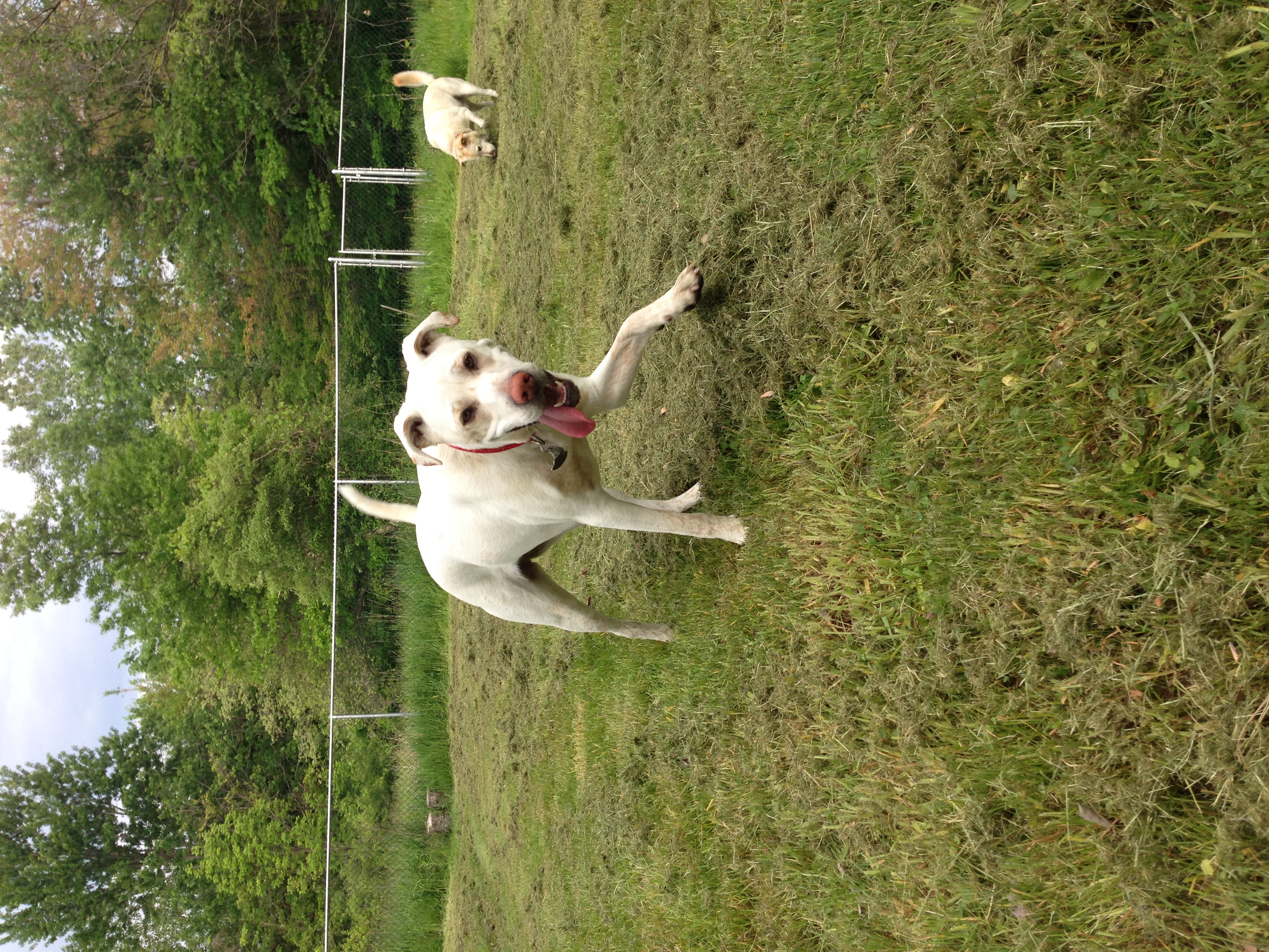 Our friends Hushpuppy and Hank at play!