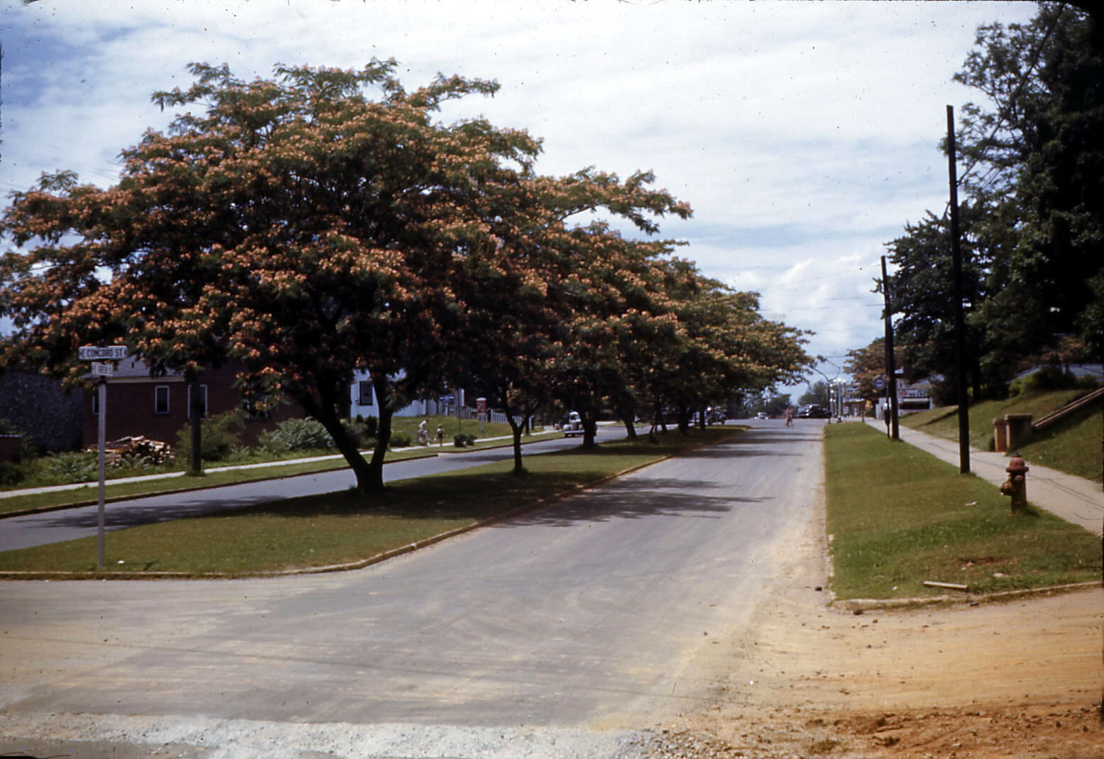 Mimosa Trees (1941) Intersection of South Green and Concord Streets. Photography by Floyd Alden Conley