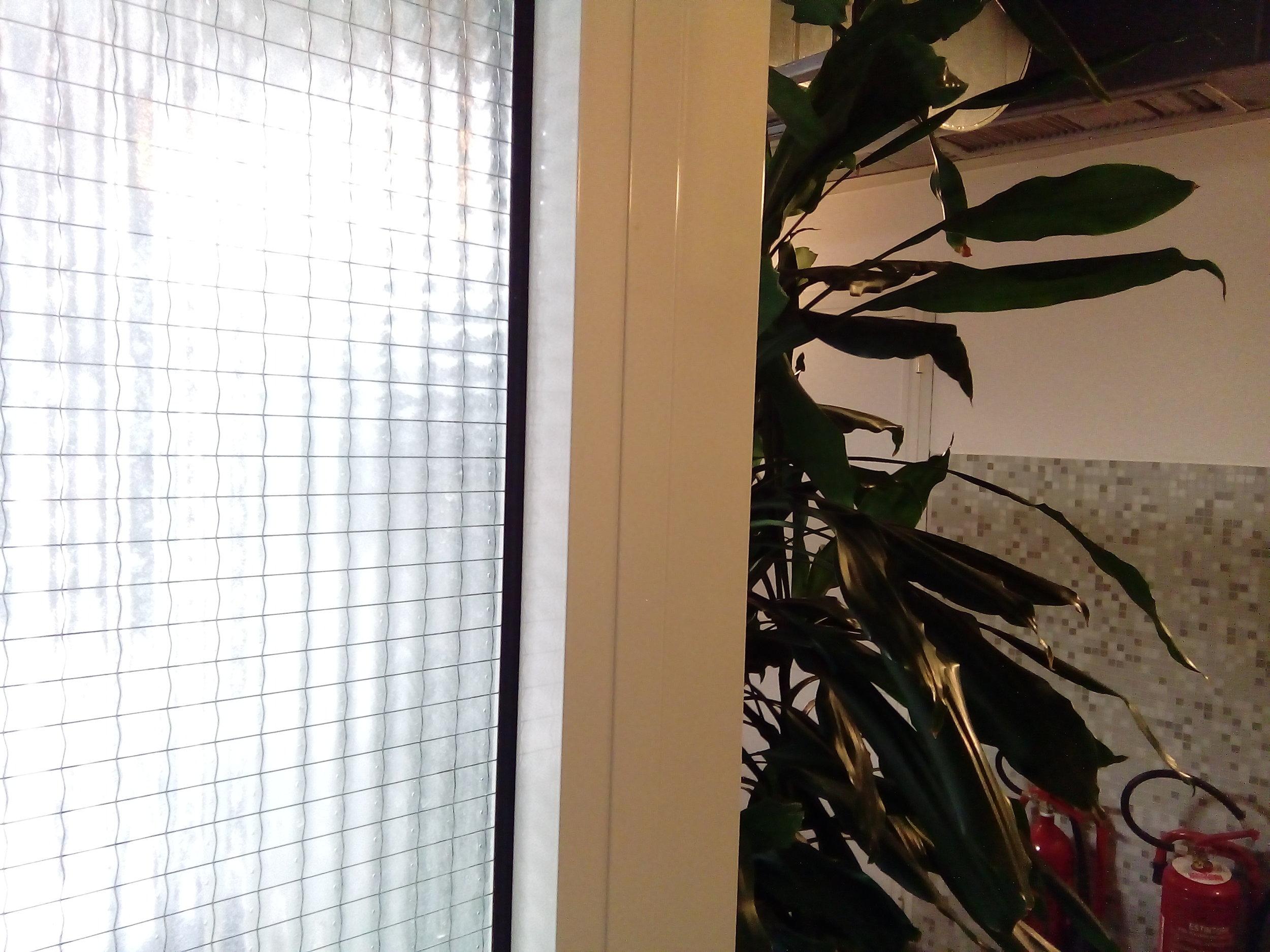 Harry the hydrangea is often shy.