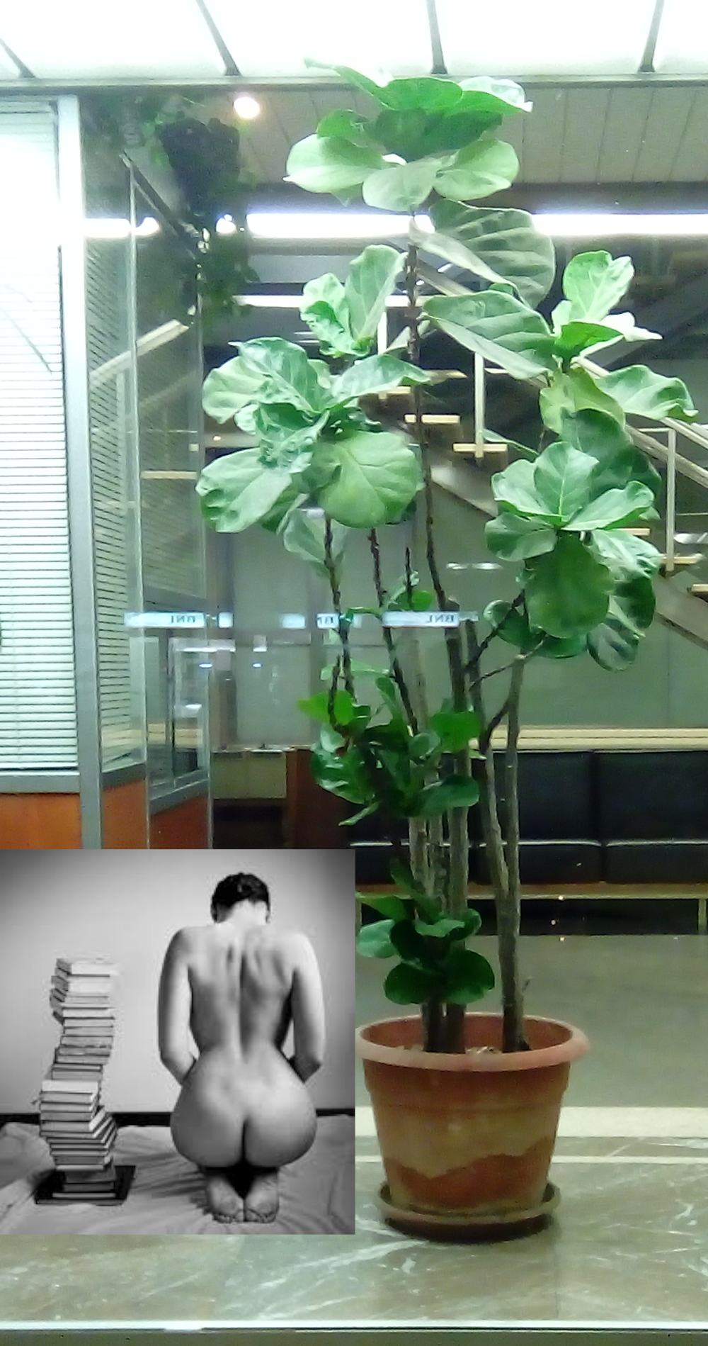 plant, nude, book hk 34.png