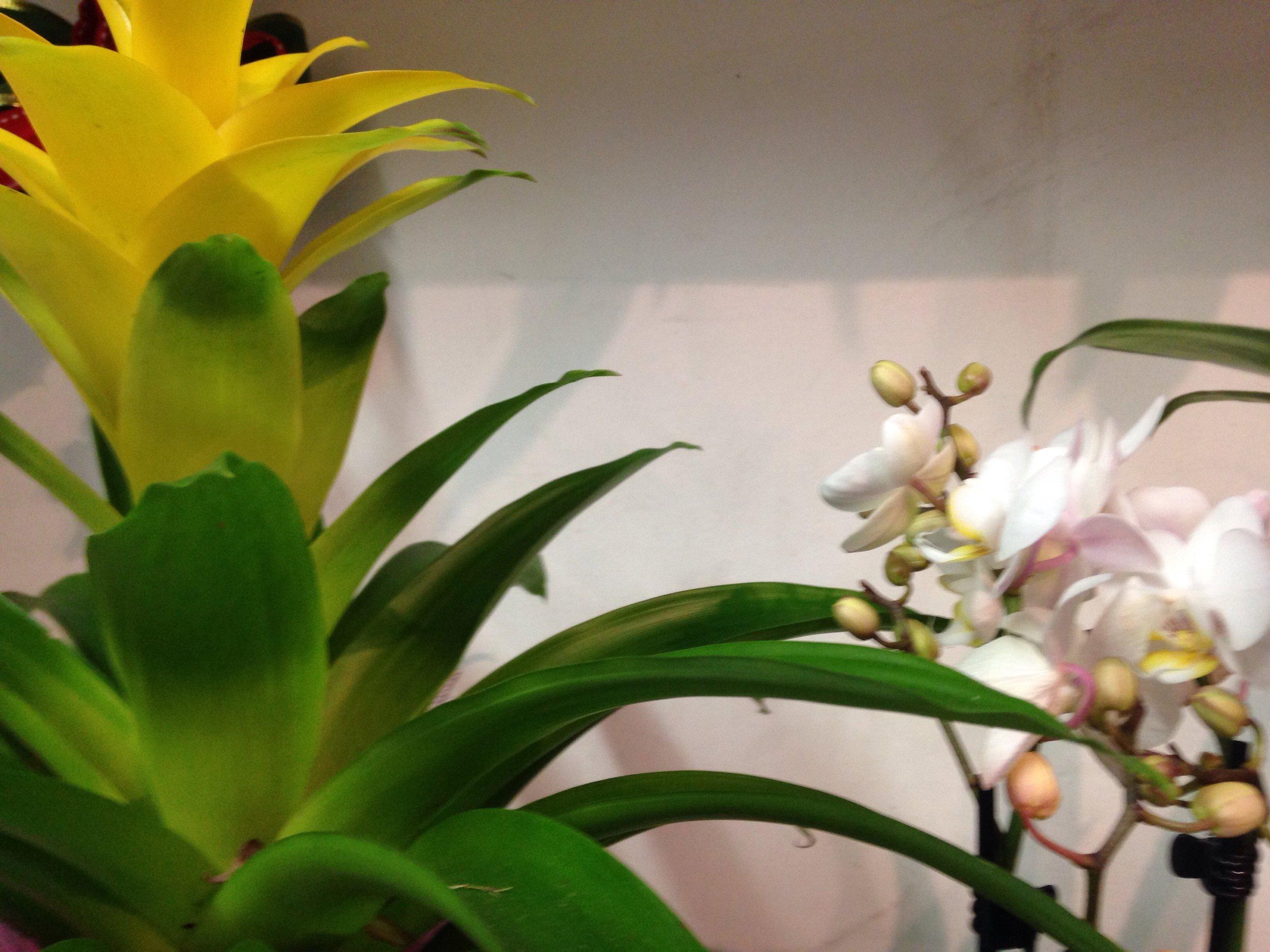 Fiori, fiori dappertutto!