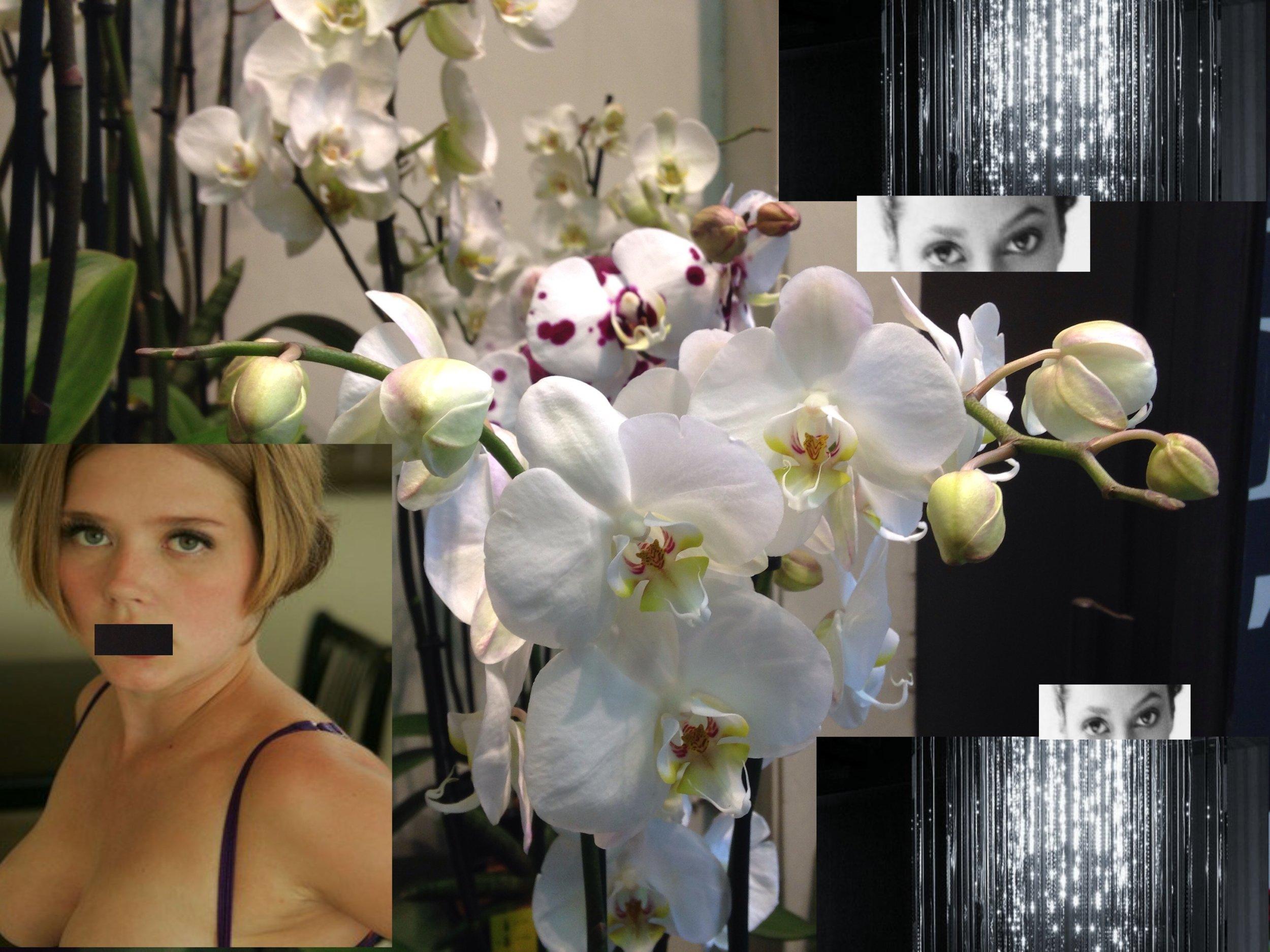 orchids.jpeg