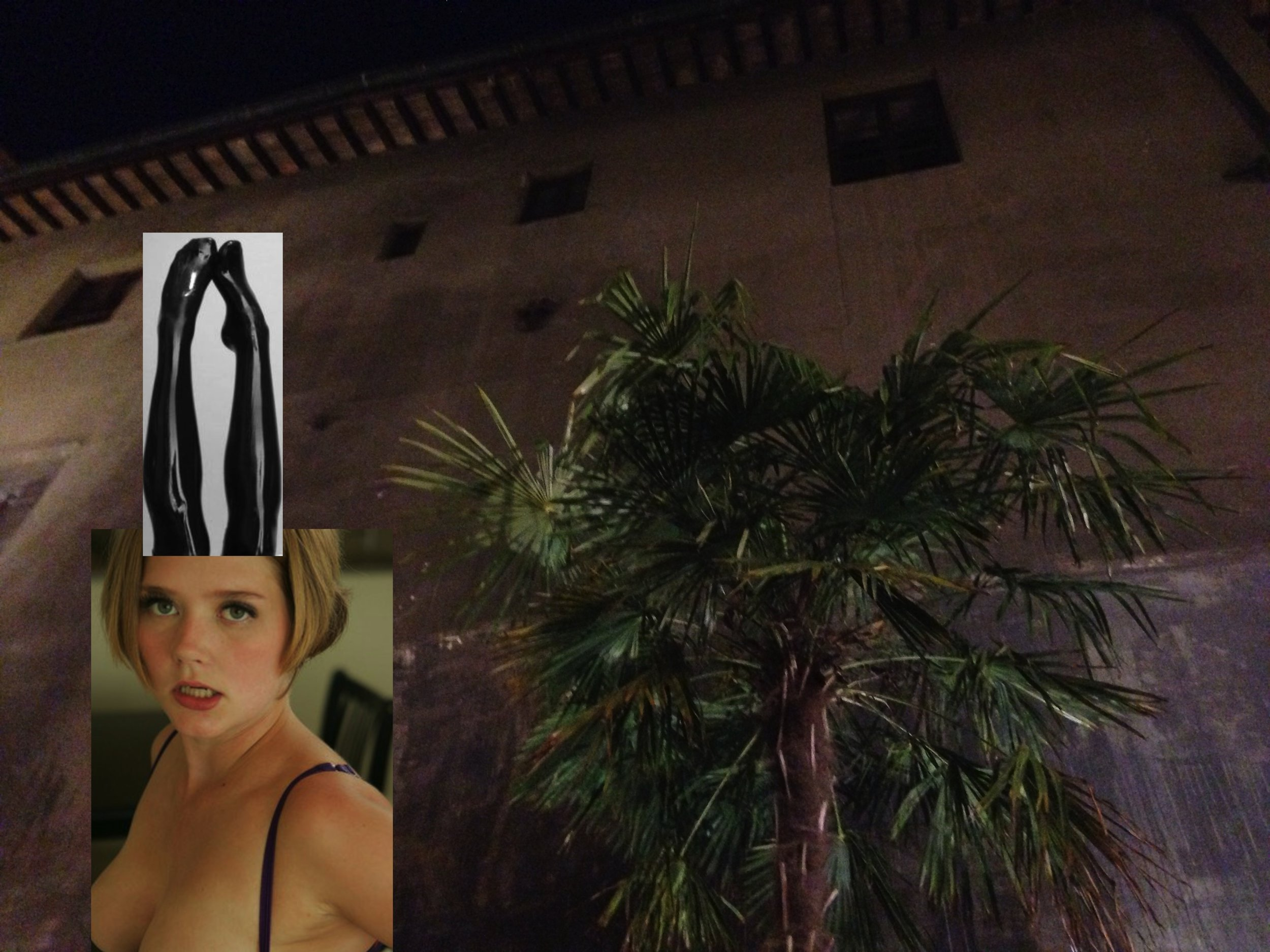night palm.jpg