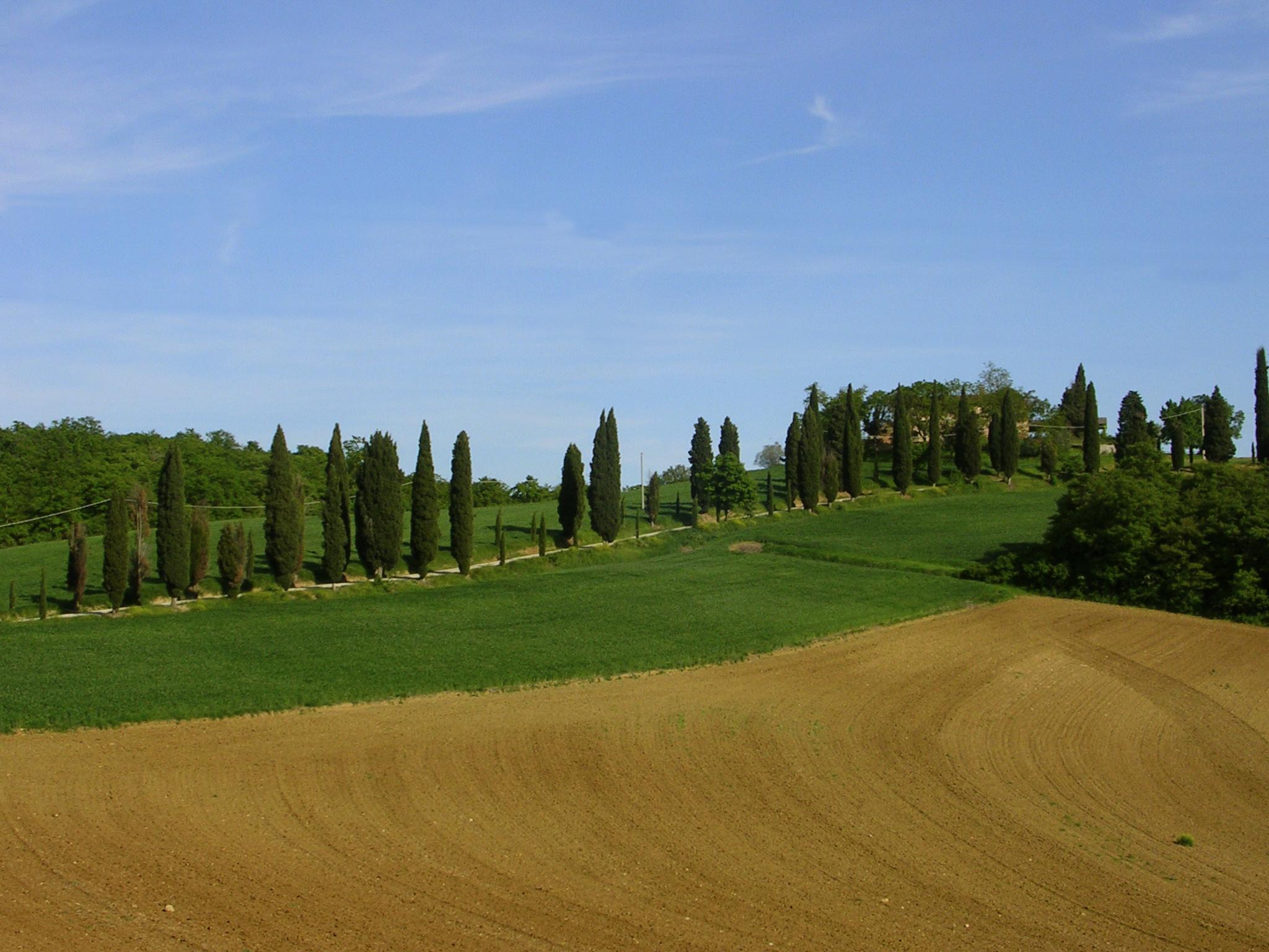 Rolling hills of cypress Siliano Alto EAT.PRAY.MOVE Yoga Retreats | Tuscany, Italy