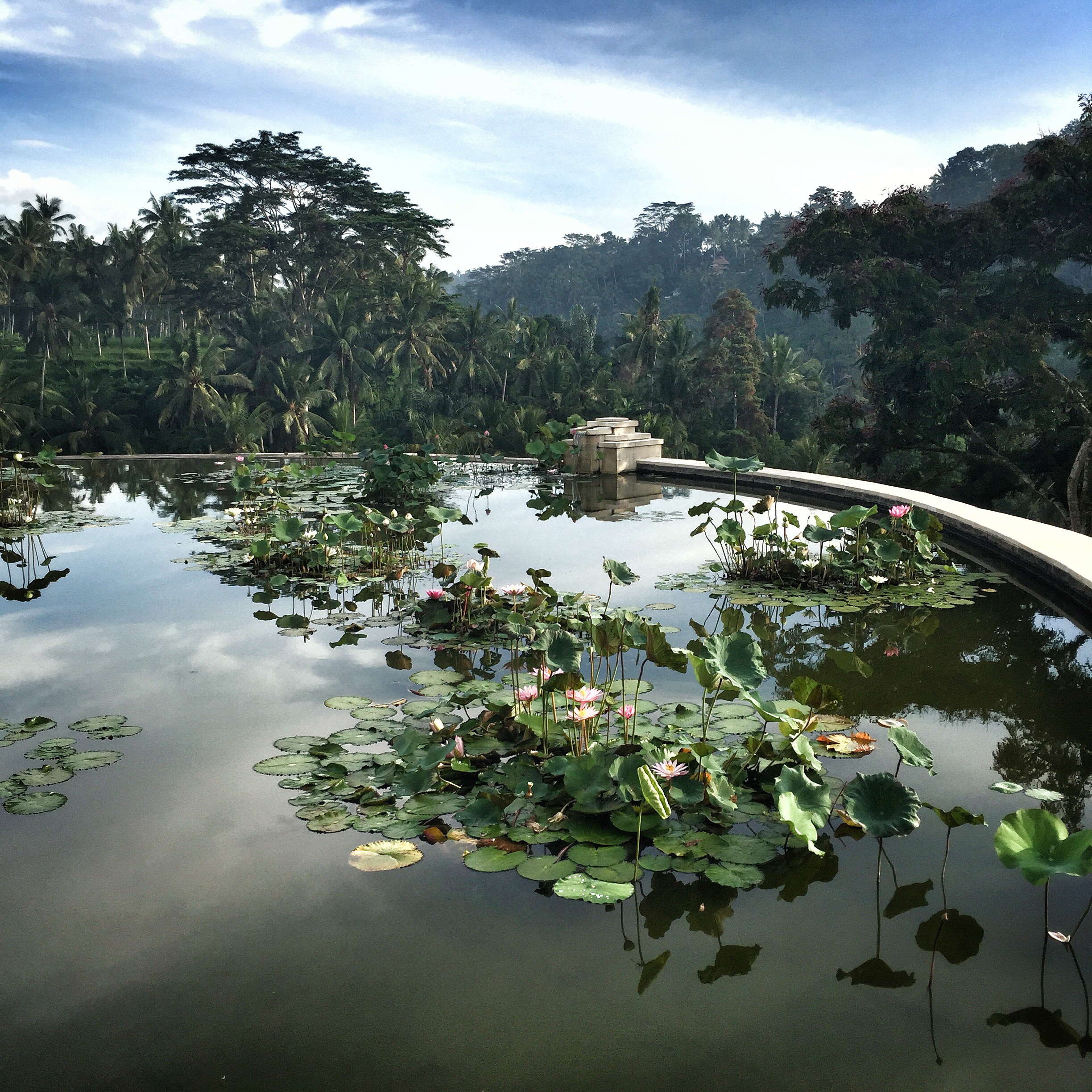 The Lotus Pond at Four Seasons | EAT.PRAY.MOVE Yoga | Bali, Indonesia