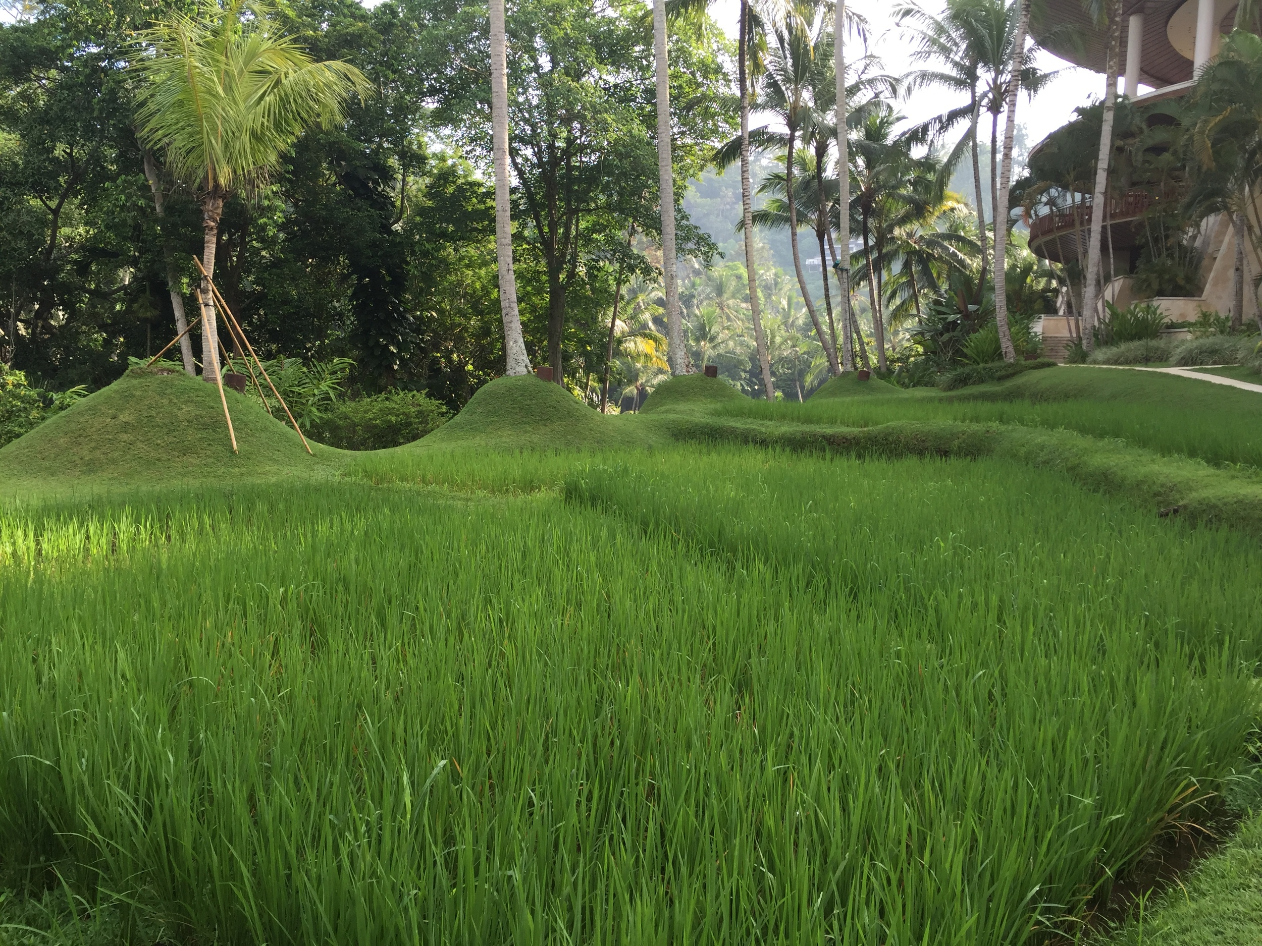 Rice terrace | EAT.PRAY.MOVE Yoga | Bali, Indonesia