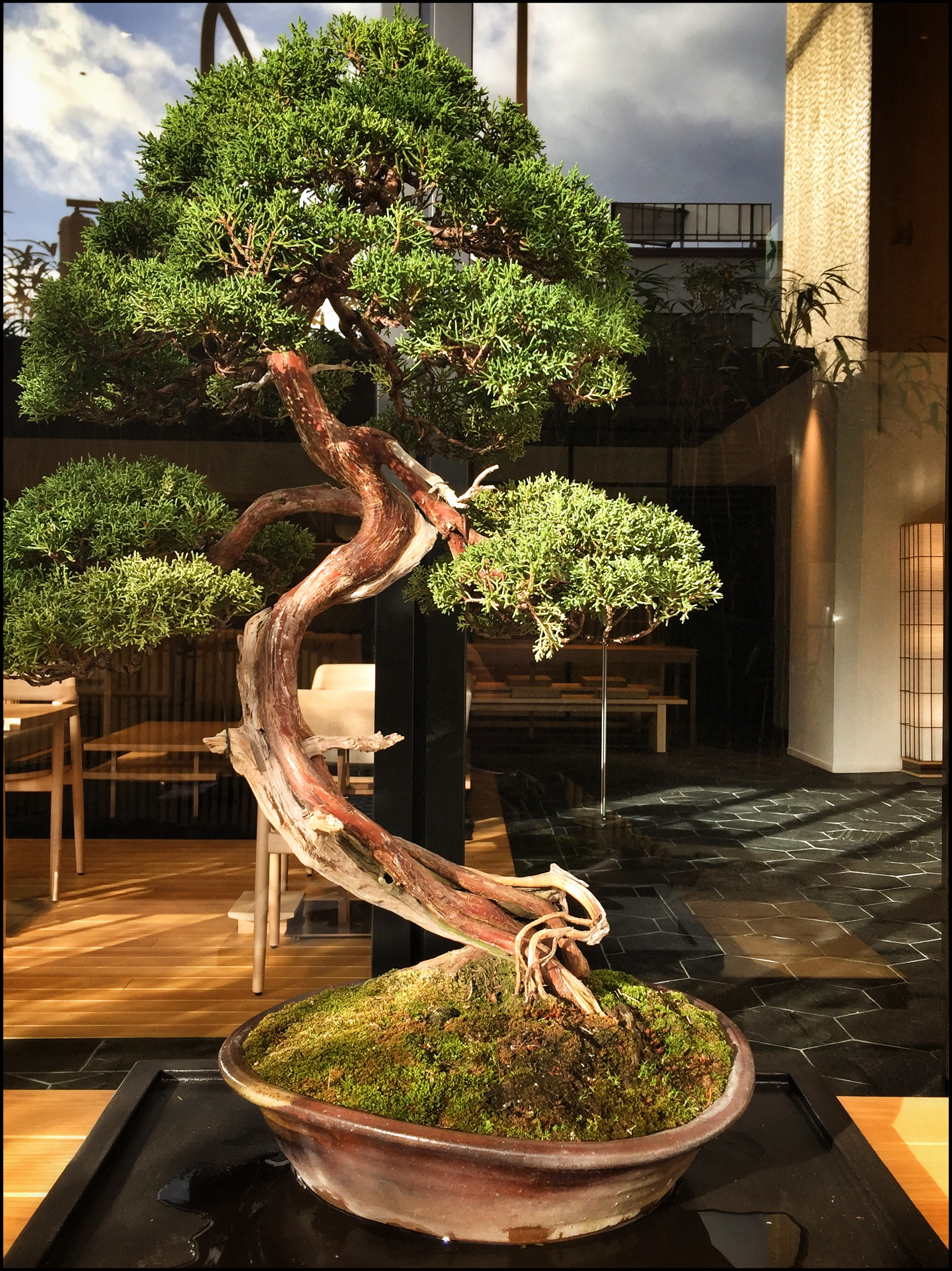 Bonsai tree  | EAT.PRAY.MOVE Yoga | Kyoto, Japan
