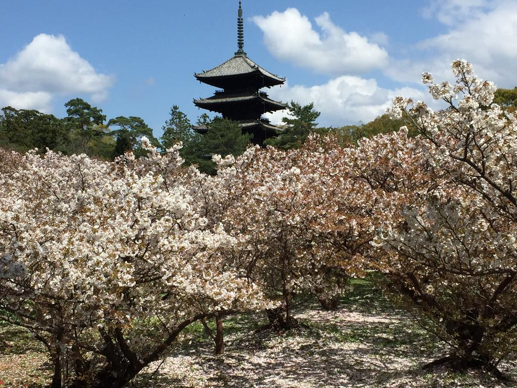 Cherry blossoms surrounding a temple  | EAT.PRAY.MOVE Yoga | Kyoto, Japan