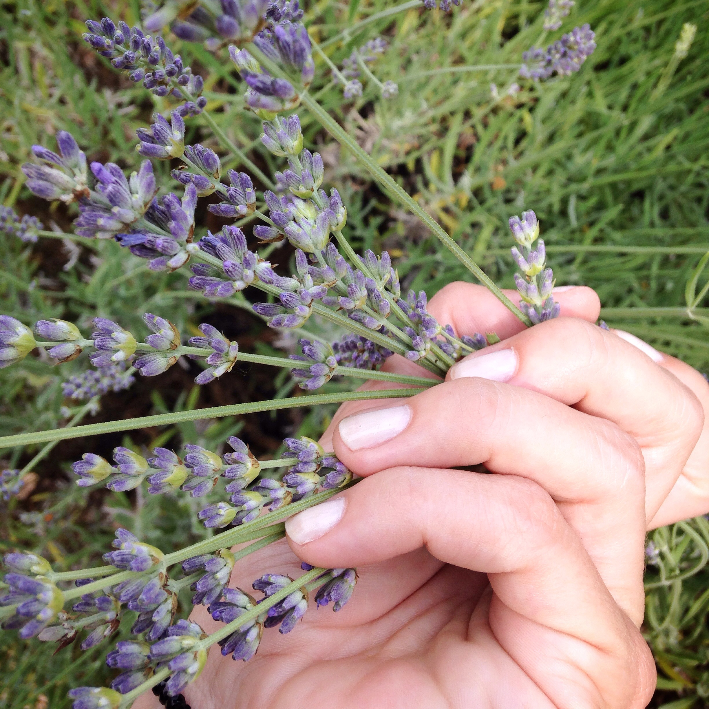 Stop and smell the lavender EAT.PRAY.MOVE Yoga Retreats | Provence, France