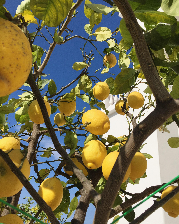 Lemon farm visit EAT.PRAY.MOVE Yoga Retreats | Amalfi Coast, Italy