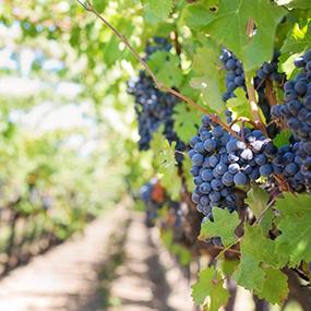 VINO+VINYASA Yoga Retreat | EAT.PRAY.MOVE | Vinyasa Wine Certification WSET |  Daytrips Spa Tastings | Italy Chianti Siena Tuscany
