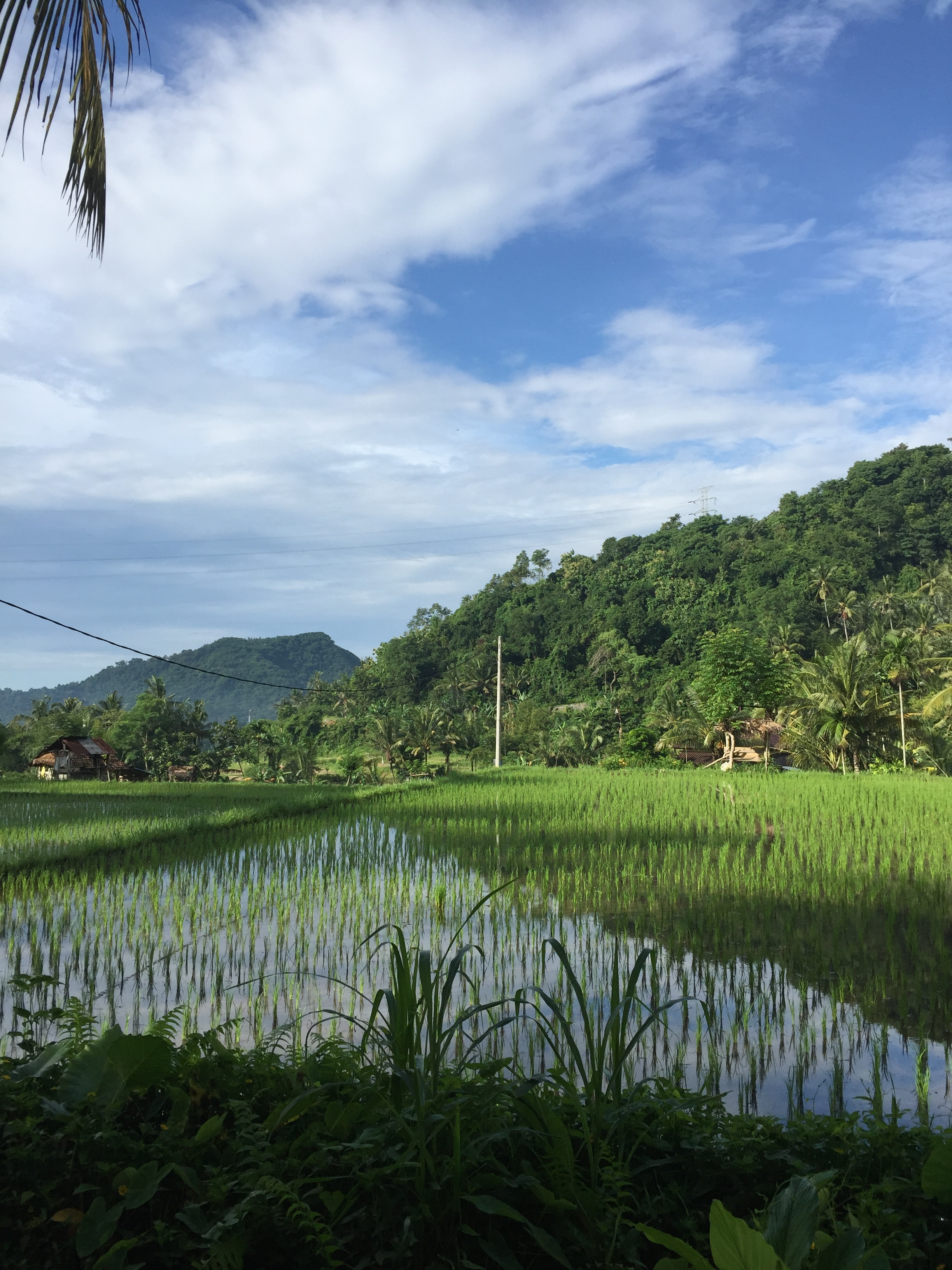 Rice field | EAT.PRAY.MOVE Yoga | Bali, Indonesia