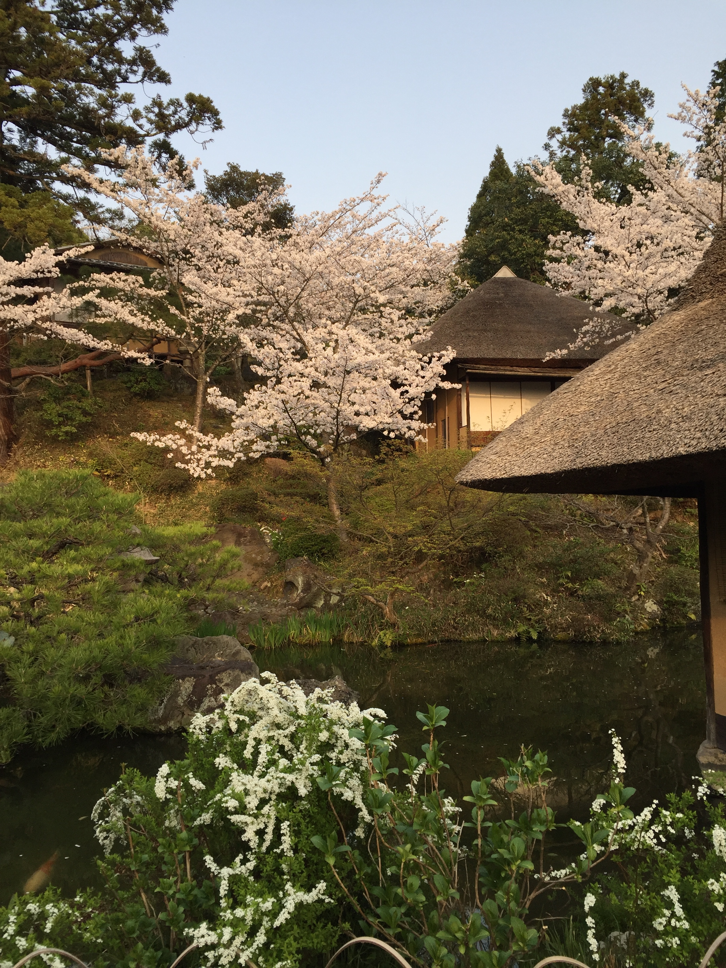 White cherry blossoms in Kyoto  | EAT.PRAY.MOVE Yoga | Kyoto, Japan