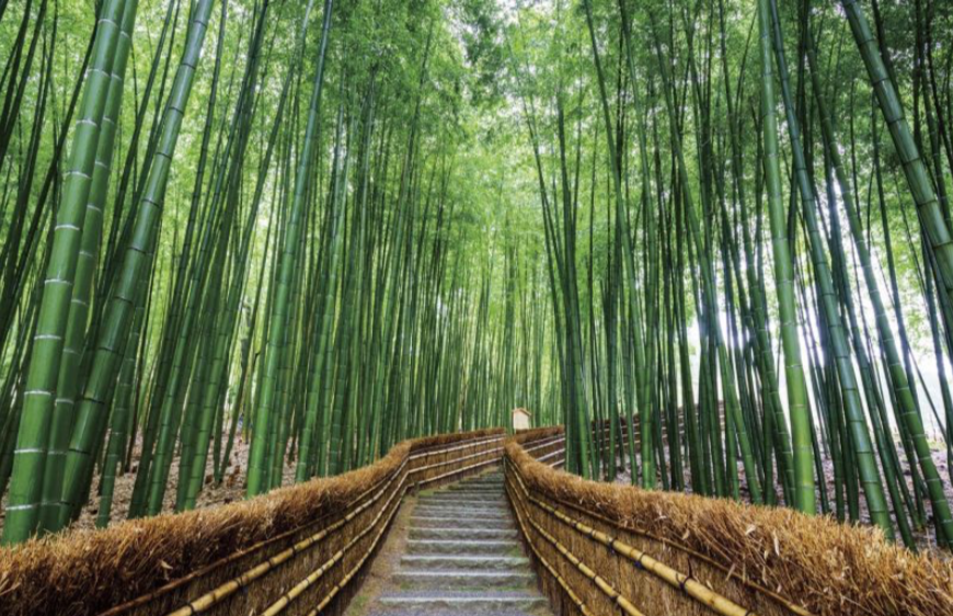 Bamboo Forest  | EAT.PRAY.MOVE Yoga | Kyoto, Japan