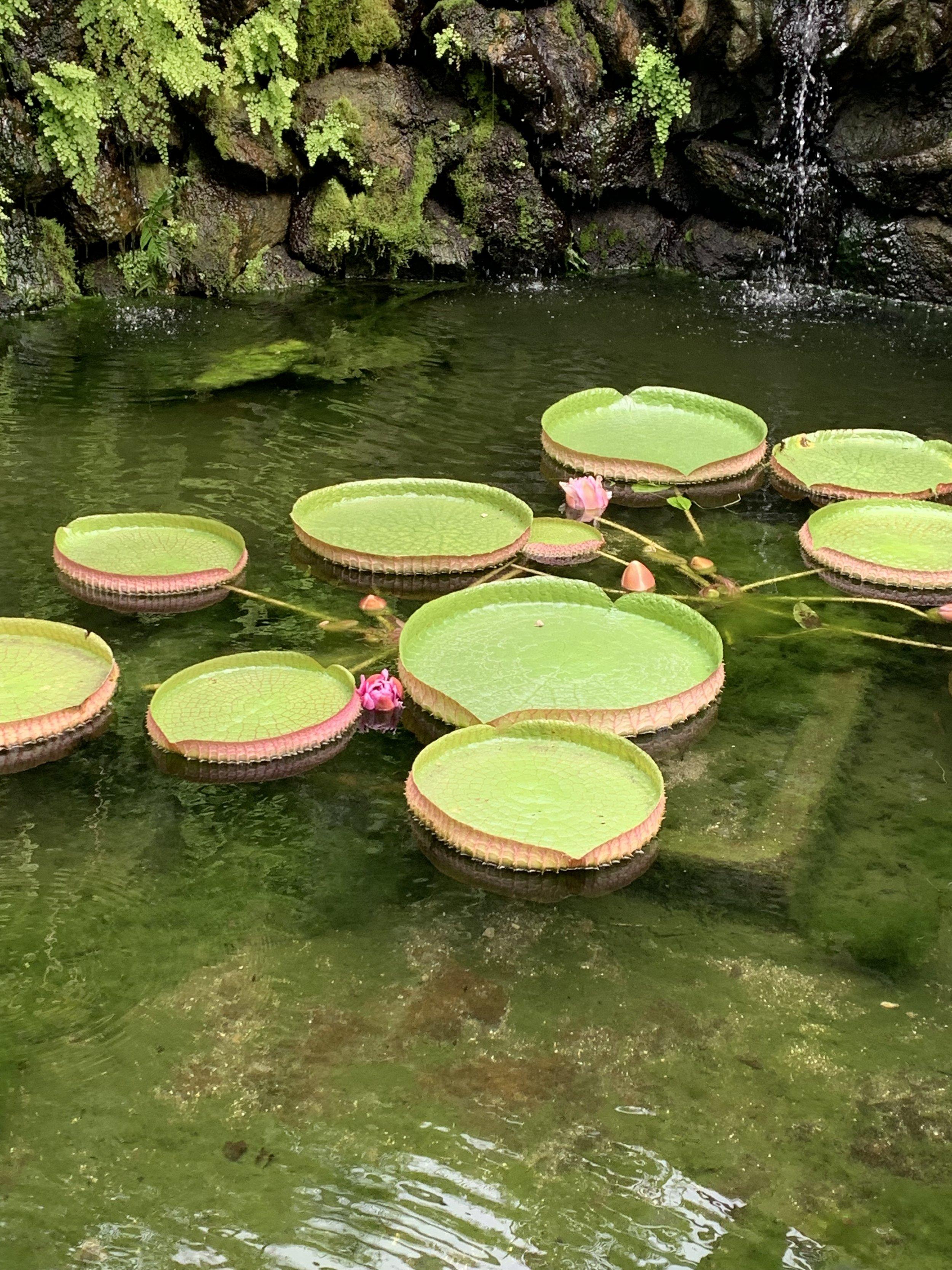 La Mortella Gardens | EAT.PRAY.MOVE Yoga Retreats | Ischia, Italy