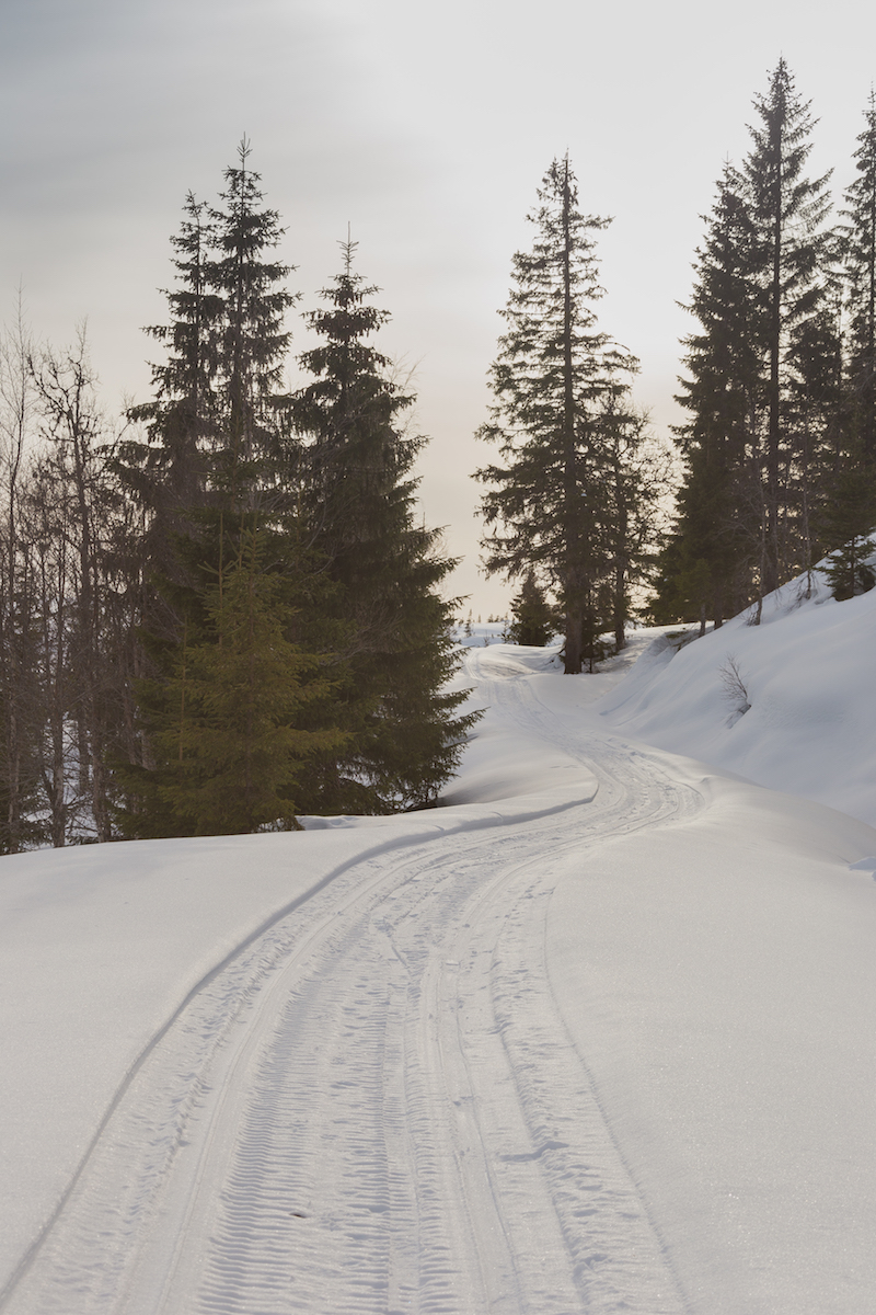 The trail, blazed by snowmobile.