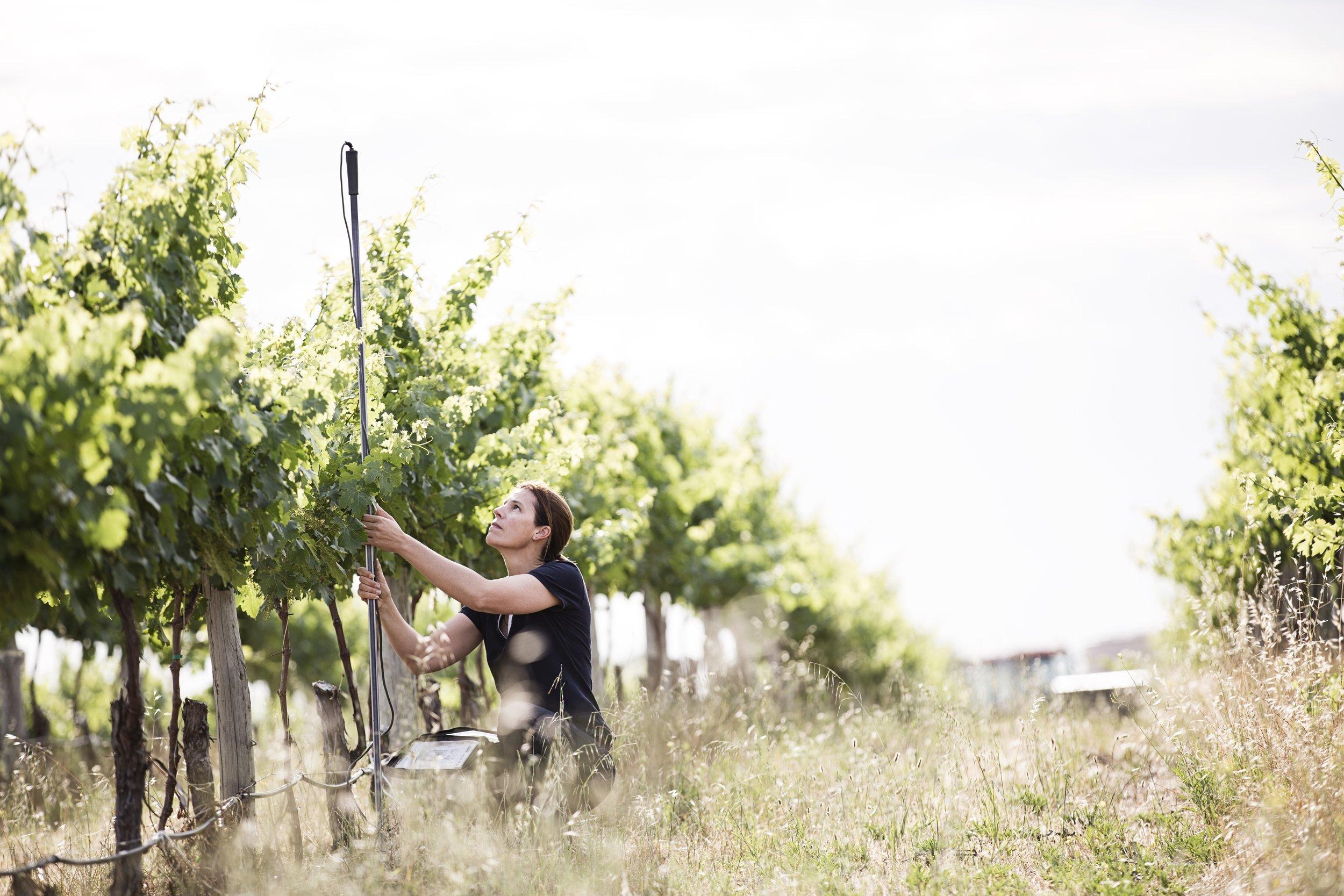 Rachel Steer: photo credit Wine Australia