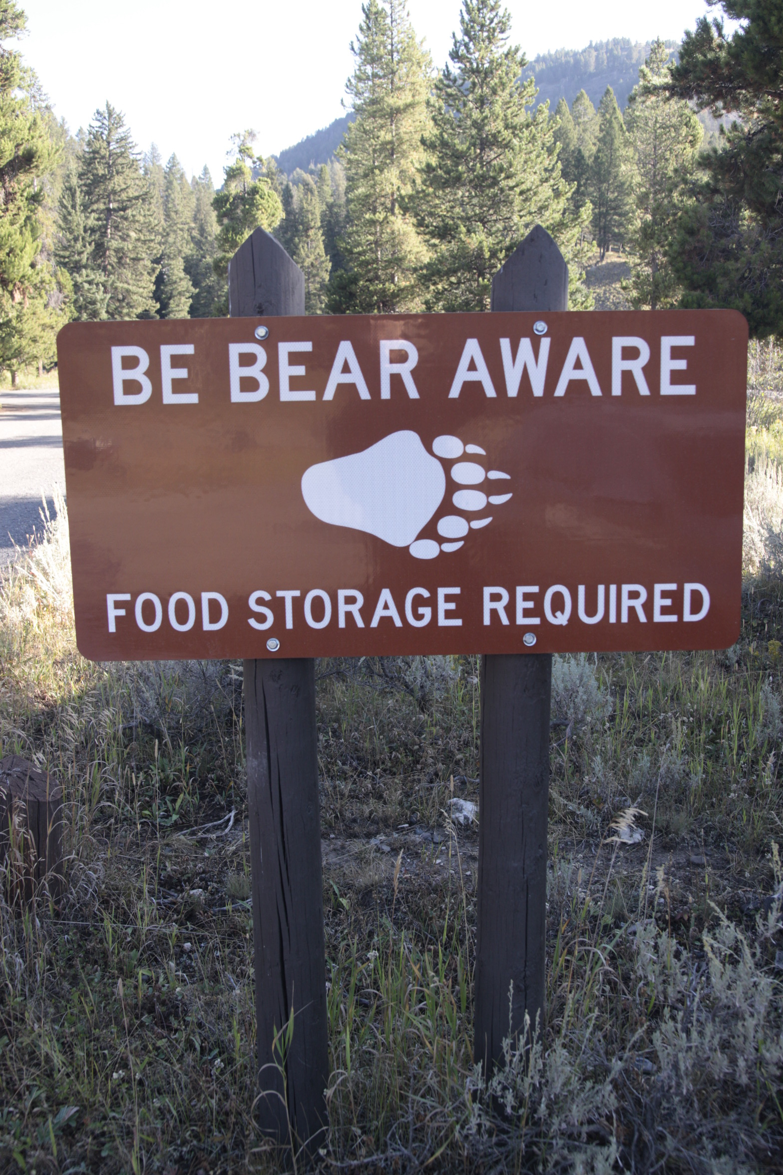 We can all be bear aware …