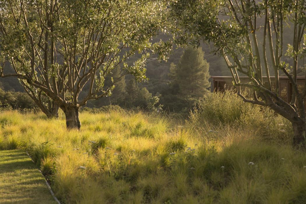 2-Grasses_Olive_Trees_2.jpg