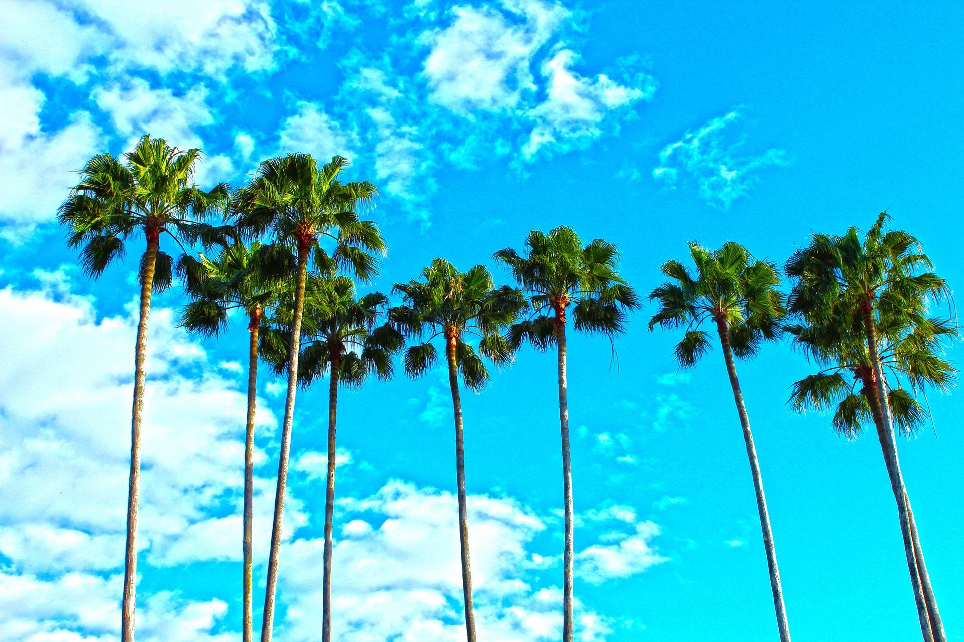 palm-trees-1277243_1920.jpg