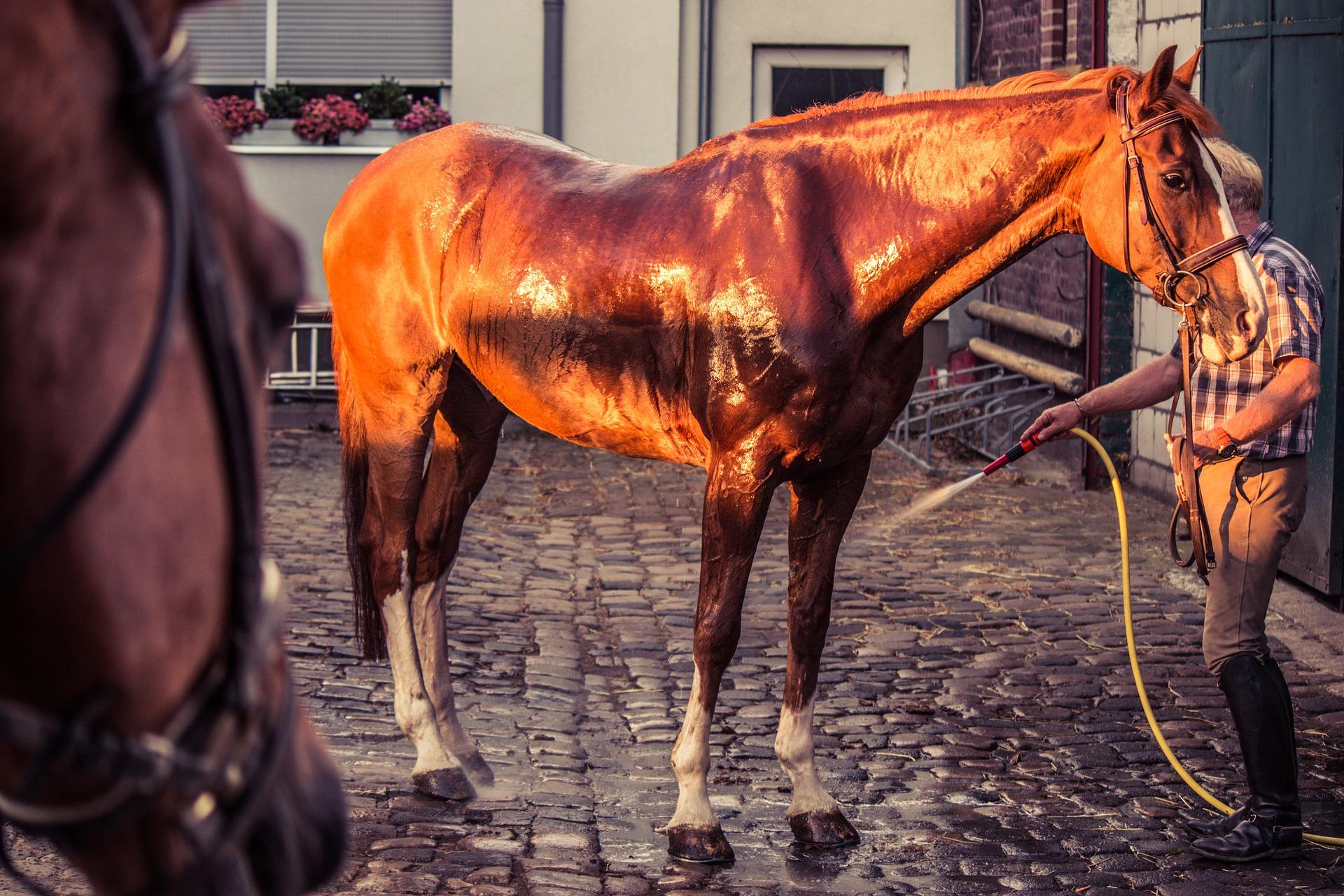 Sterling Essentials horse-1566824_1920.jpg