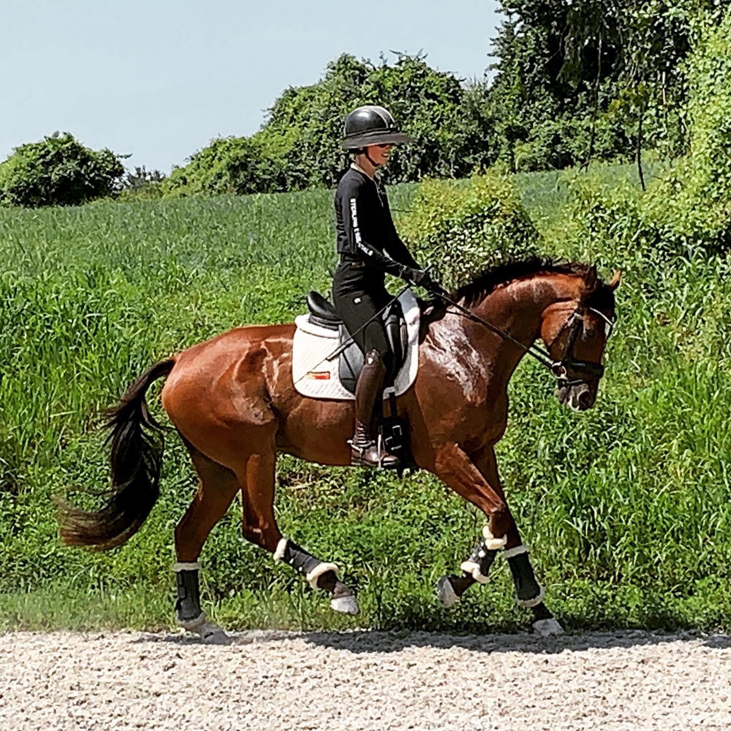 Talented dressage rider and Matt's wife, Cecily Clark, works together with Matt to keep every horse on their toes and in best form.