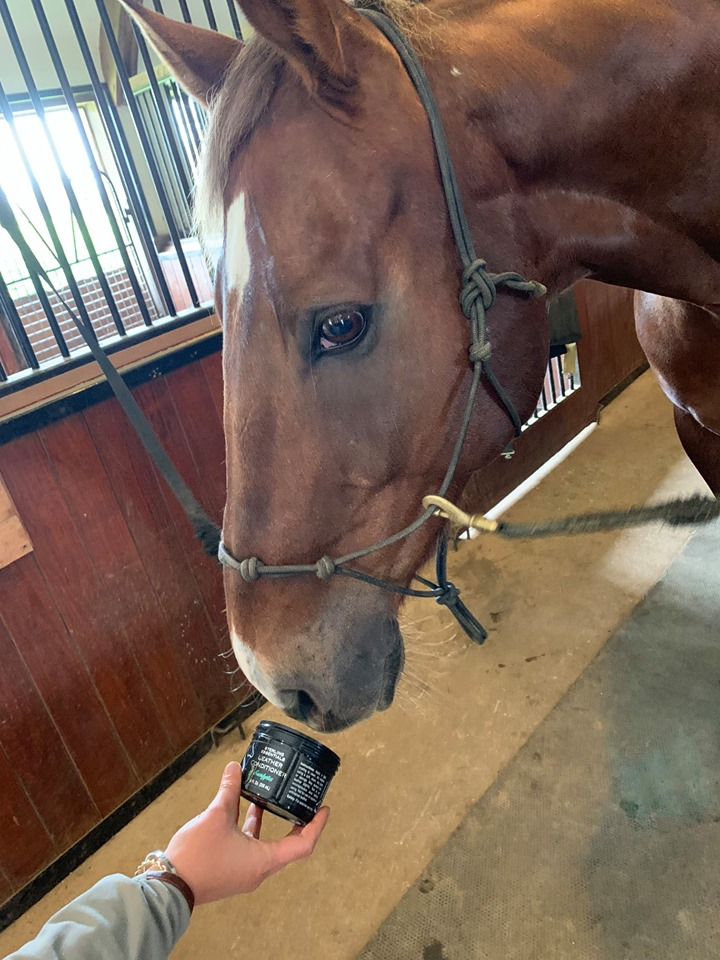 Flaxen enjoys a daily sniff of leather conditioner, too!