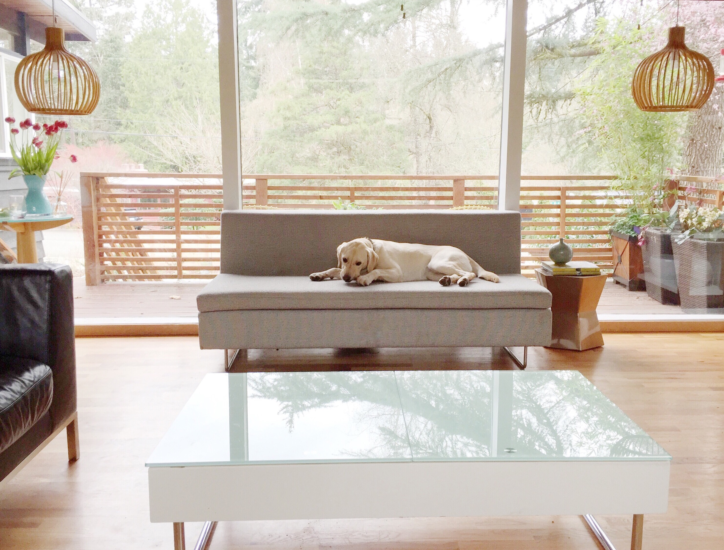 I can't pick my favourite element in this room, the puppy...the light fixtures...the wall of windows...or the view into the yard? It's all so good!!!