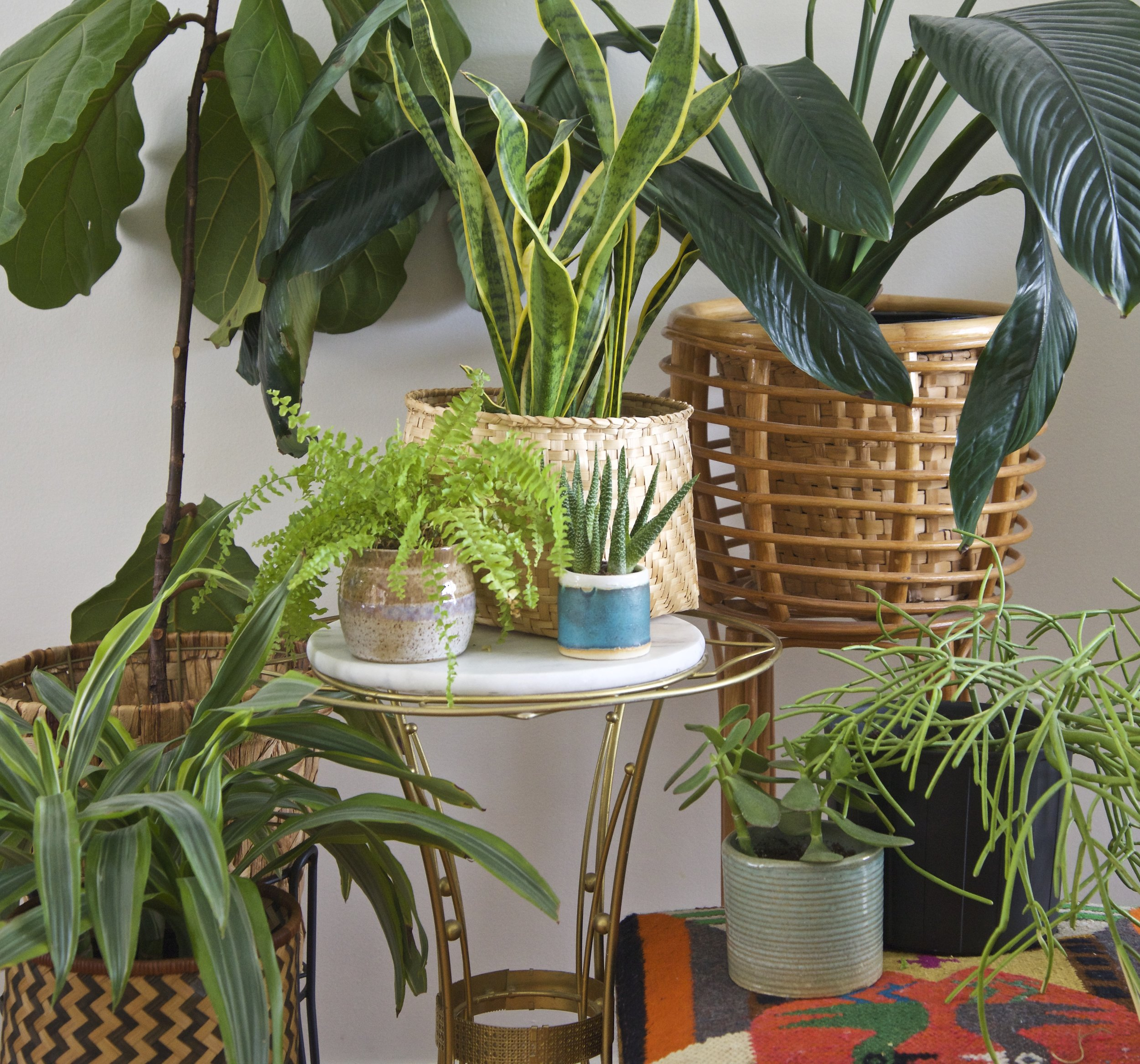 I grouped some of our houseplants together for this photo. Inspiration is every where I look!