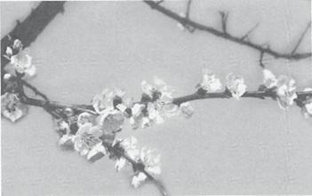 mb30-dharma3.jpg