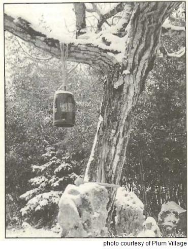 mb18-Redwood.jpg