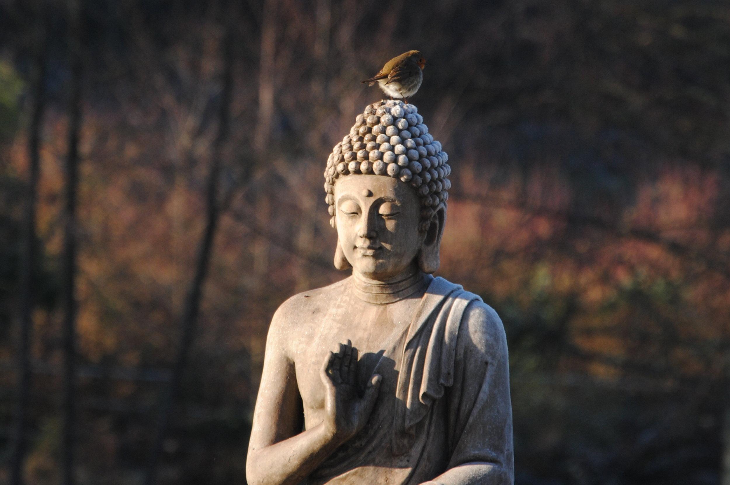 MB79-20 buddha w bird courtesy of monastic Sangha.JPG