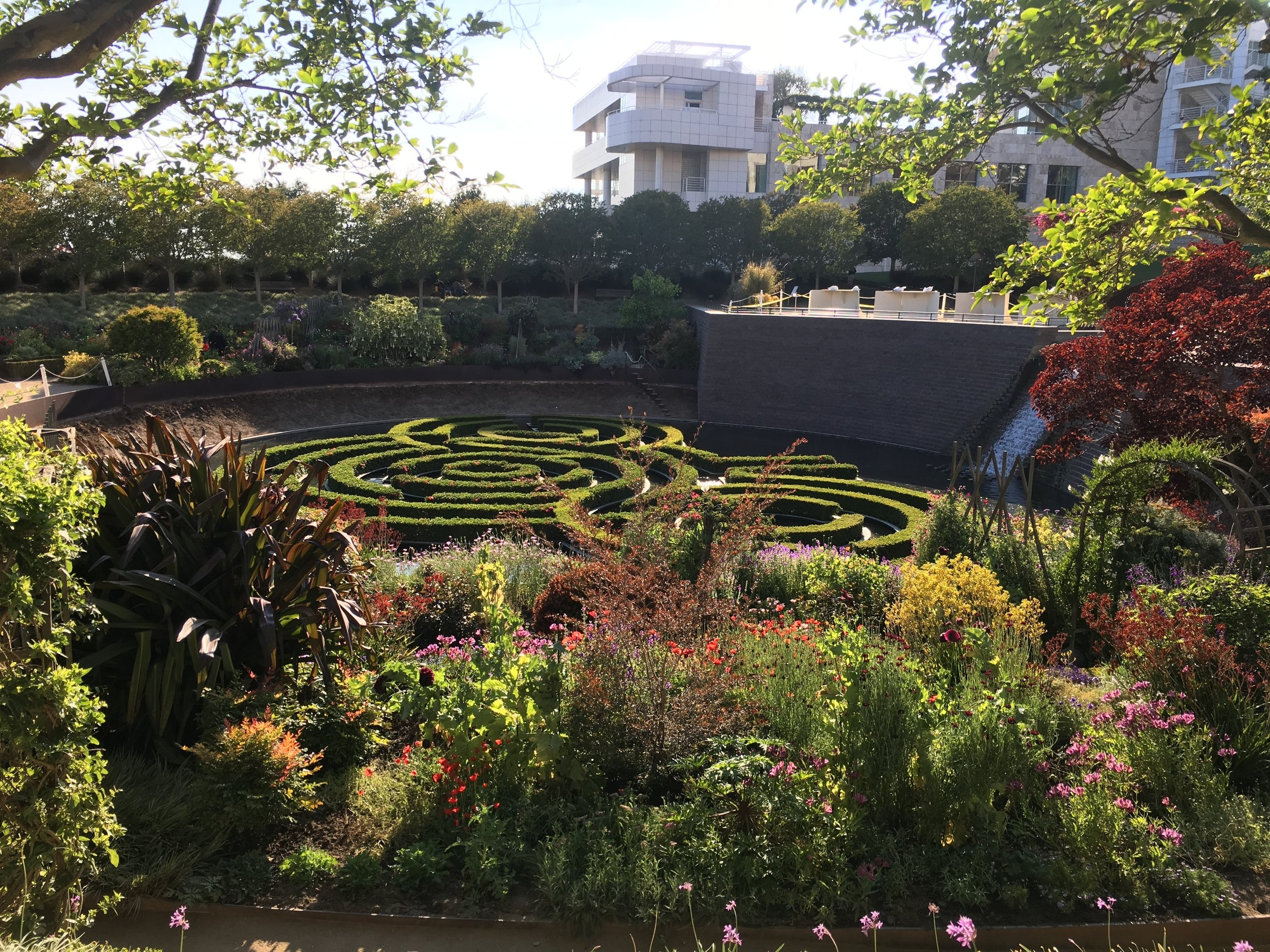 Not pictured in the Getty garden is a little duck who swims throughout the maze.