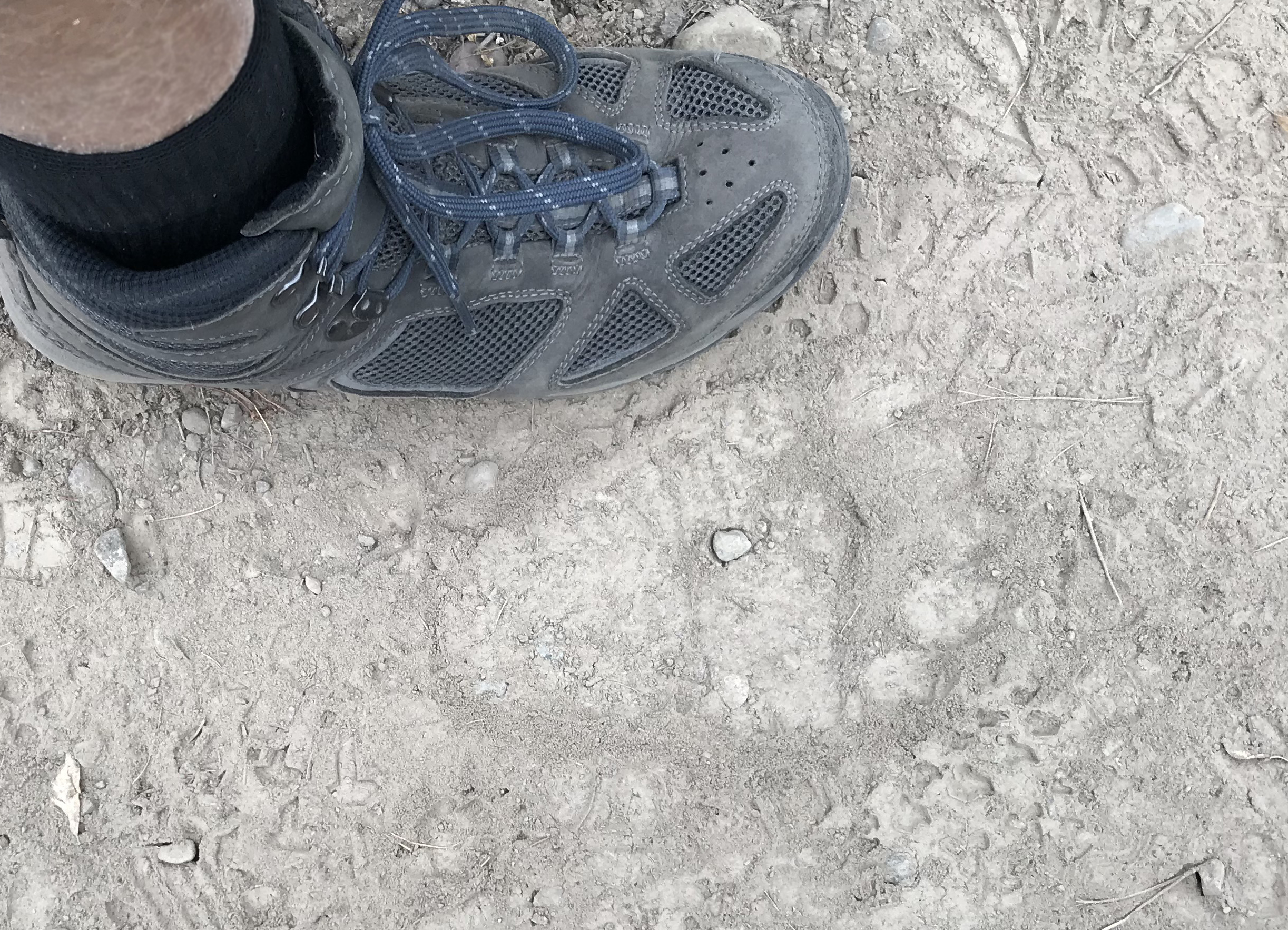We confirmed with the Ranger... this is indeed a grizzly print.