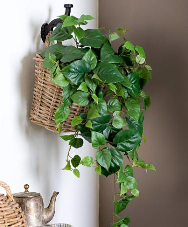 philodendrons in wall basket