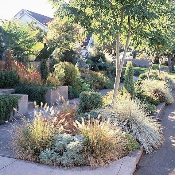 attractive grass garden