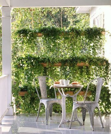 verandah with plant privacy screen
