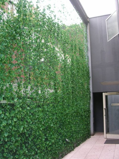 artificial green bamboo fence for decoration buy cheap.htm 60 gorgeous fence ideas and designs     renoguide australian  60 gorgeous fence ideas and designs